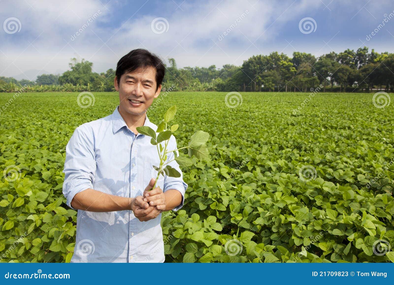 Árbol joven chino de la explotación agrícola del granjero