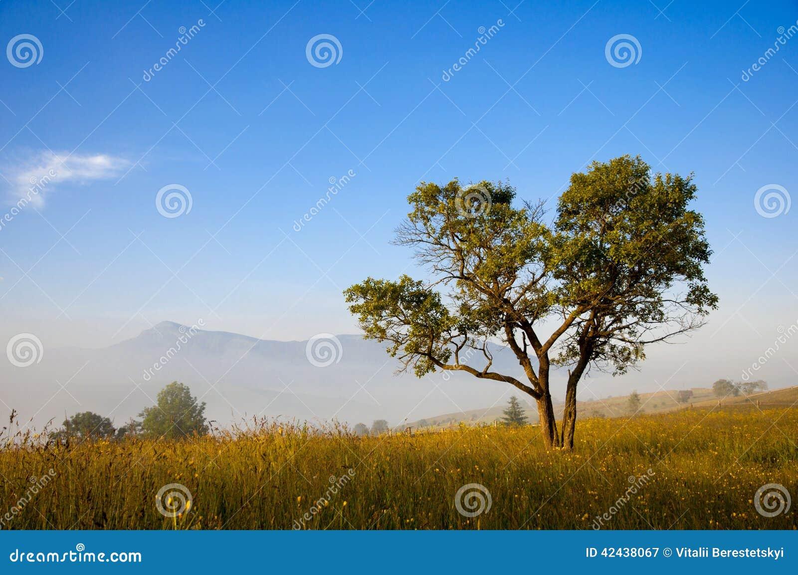 Árbol mágico en la madrugada