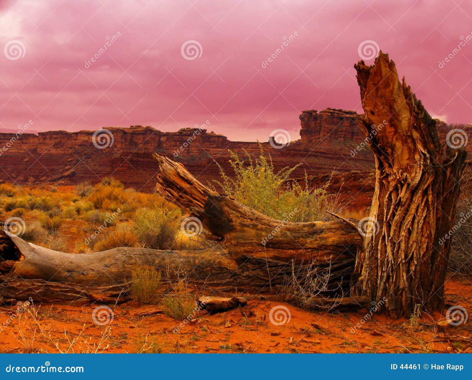Download Árbol muerto imagen de archivo. Imagen de madera, rojo, árboles - 44461