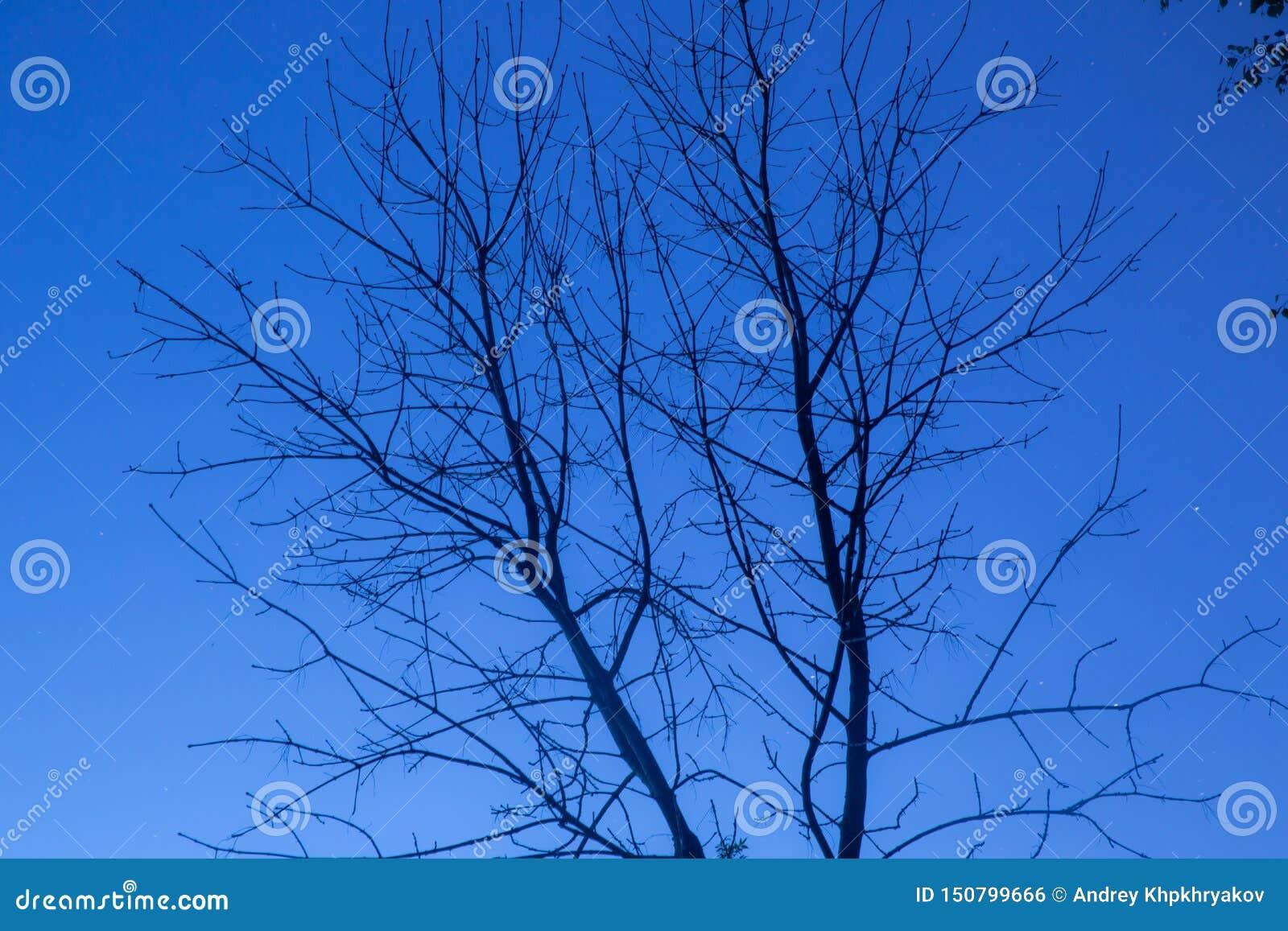 Árbol muerto en el cielo nocturno