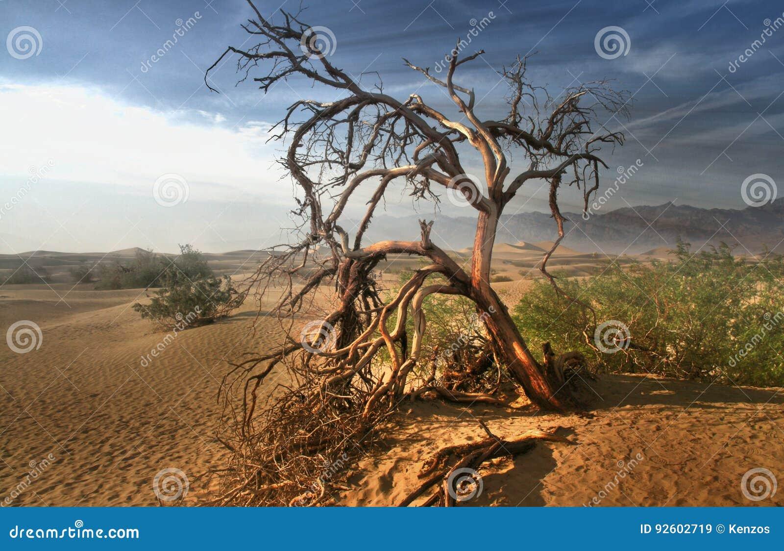 Árbol muerto en el desierto de Mojave - Death Valley California