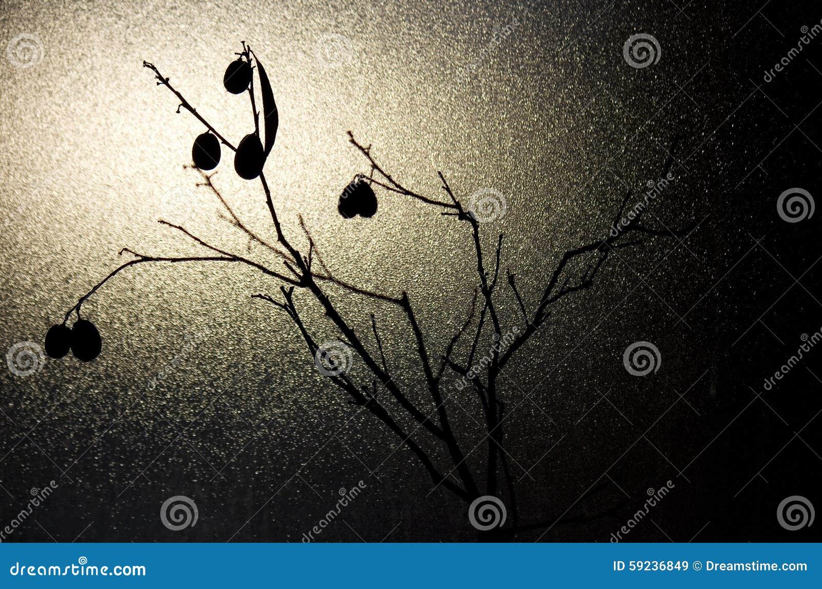 Download Árbol muerto en invierno imagen de archivo. Imagen de hojas - 59236849