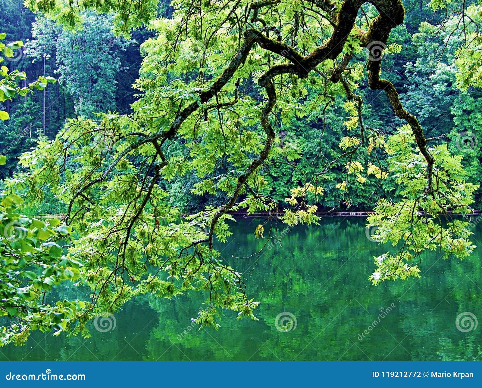 árbol, naturaleza, verde, árboles, bosque, primavera, paisaje, hojas, planta, hoja, agua, parque, río, cielo, sol, rama, verano,