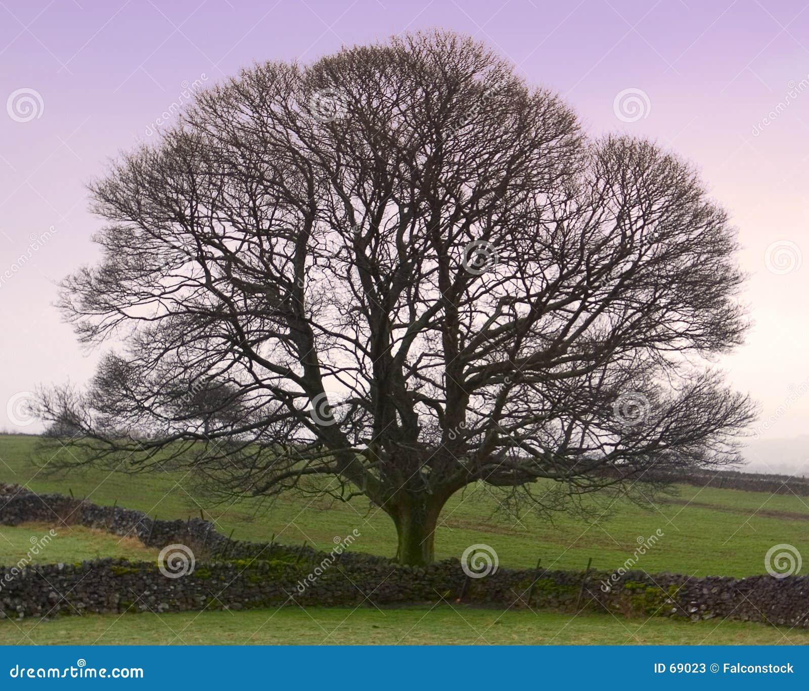 Árbol perfecto - invierno