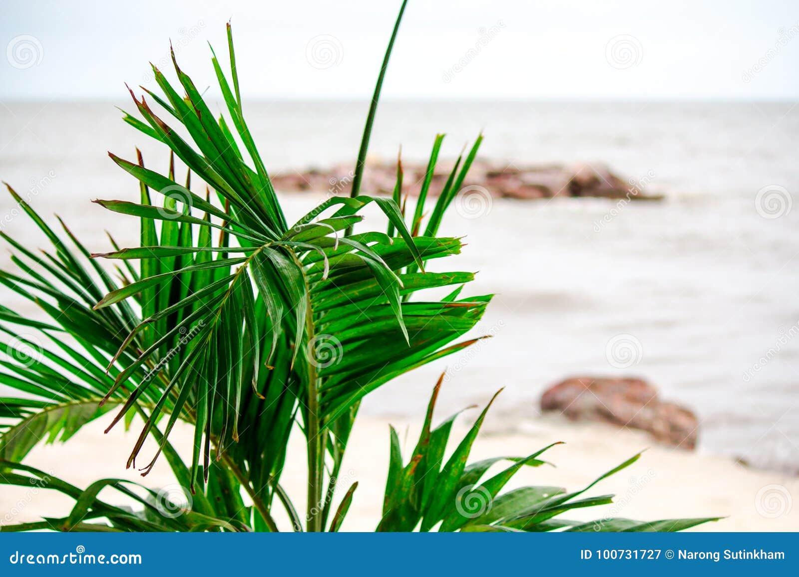 Árbol por el mar solo