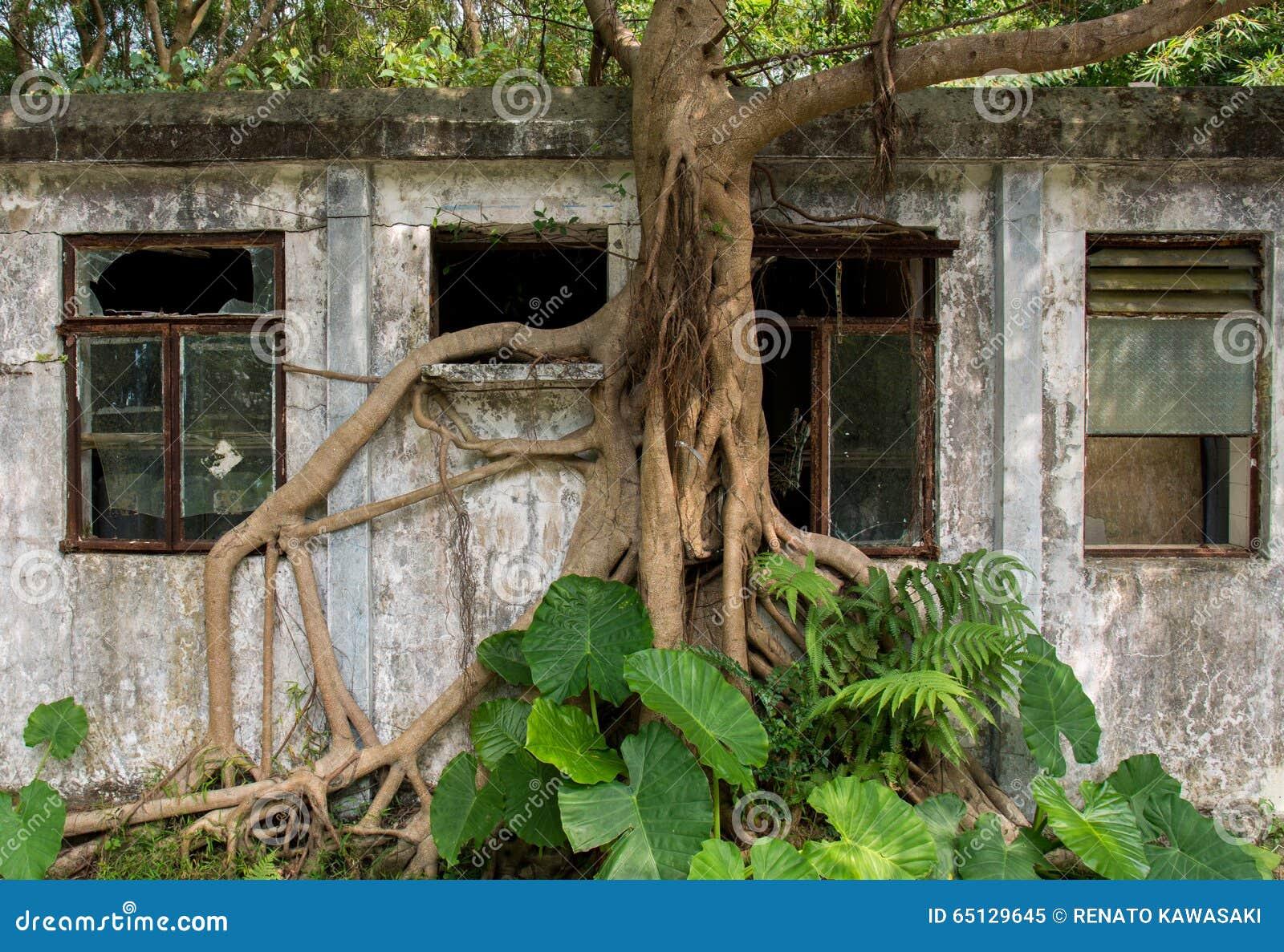 Árbol que asume el control el edificio abandonado en Hong Kong