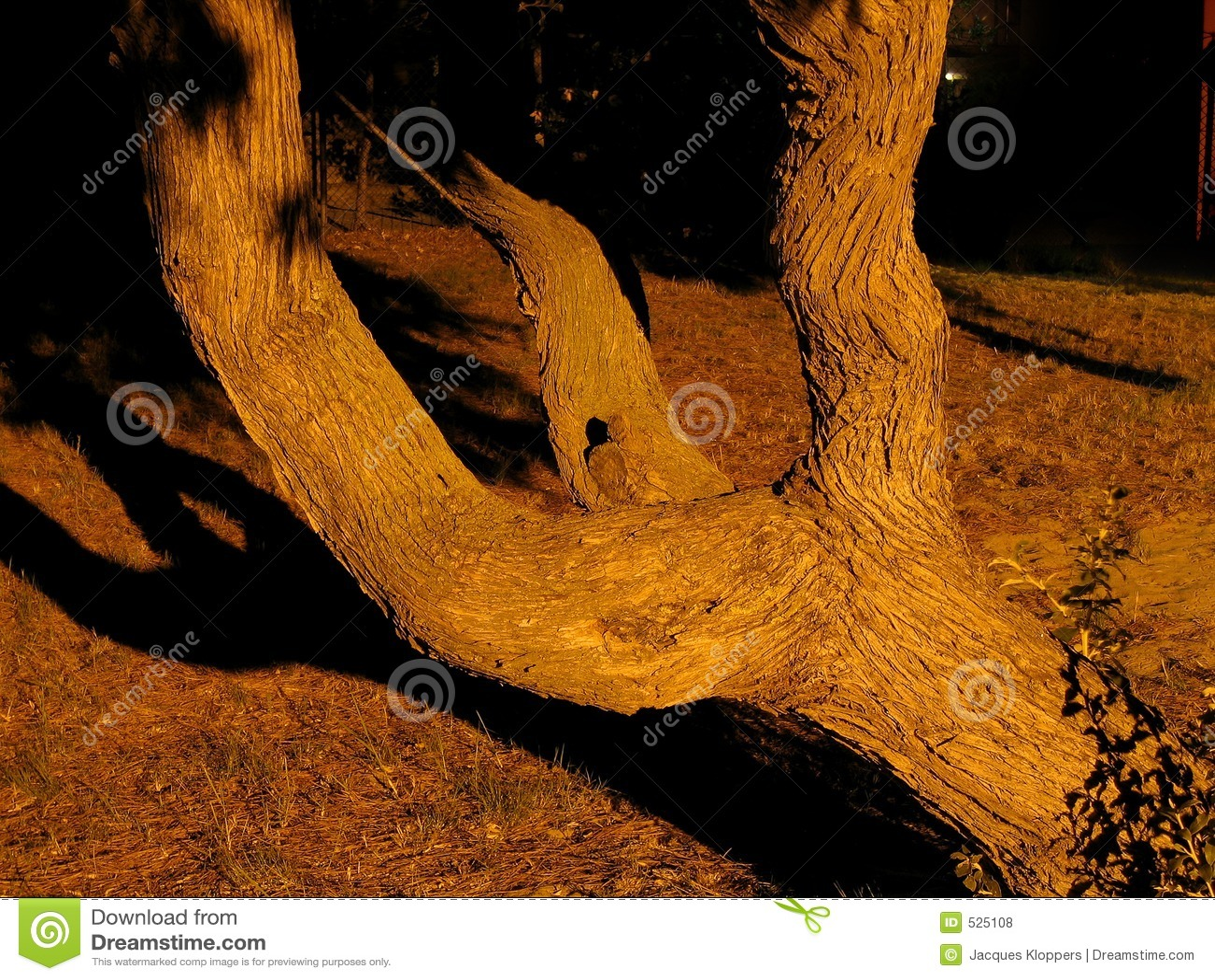 Árbol ramificado