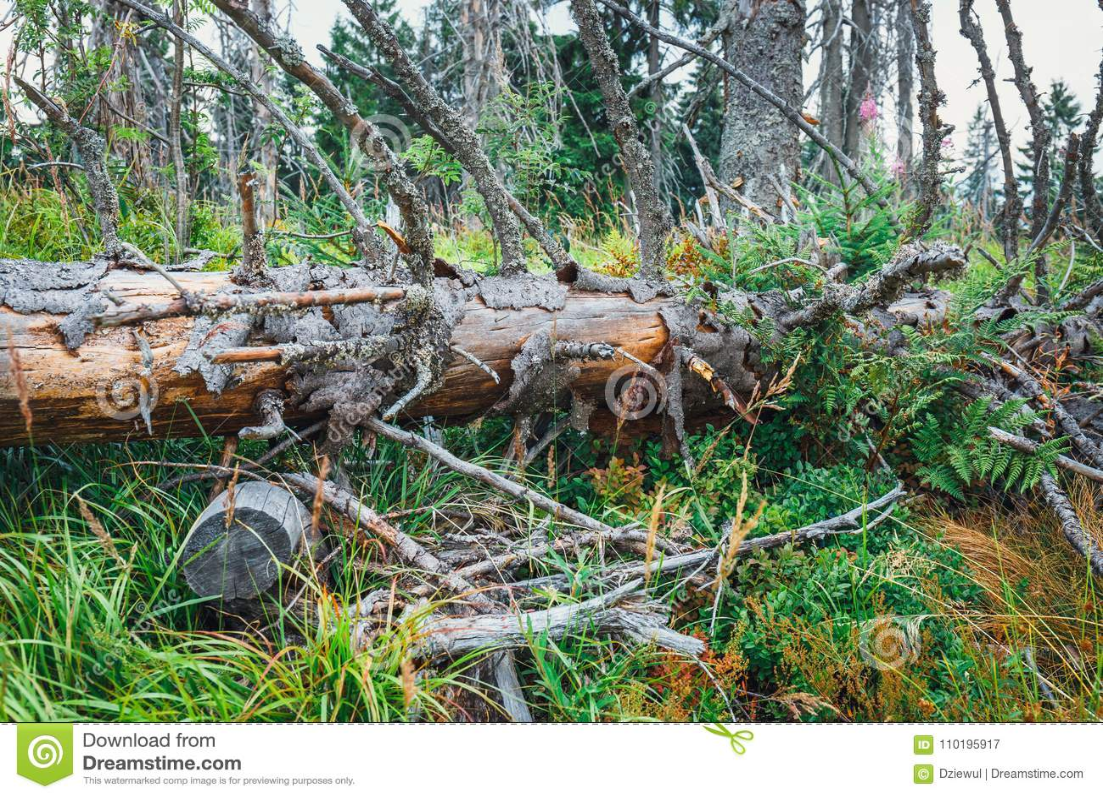 Árbol roto por un fuerte viento