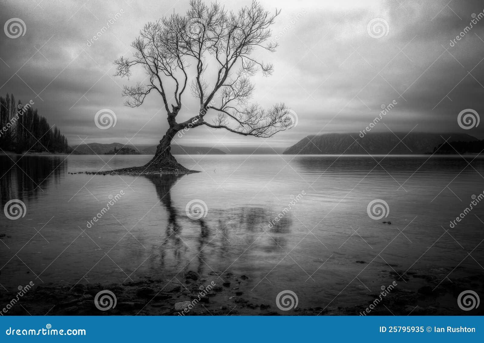 Árbol solitario en un lago