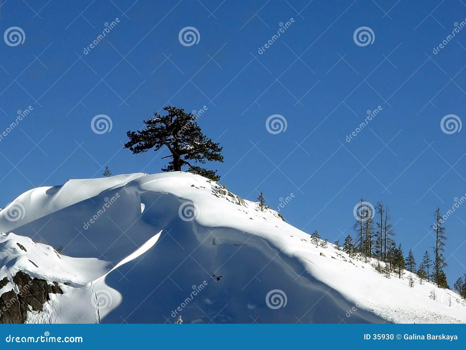 Download Árbol solo foto de archivo. Imagen de holidays, bosques - 35930