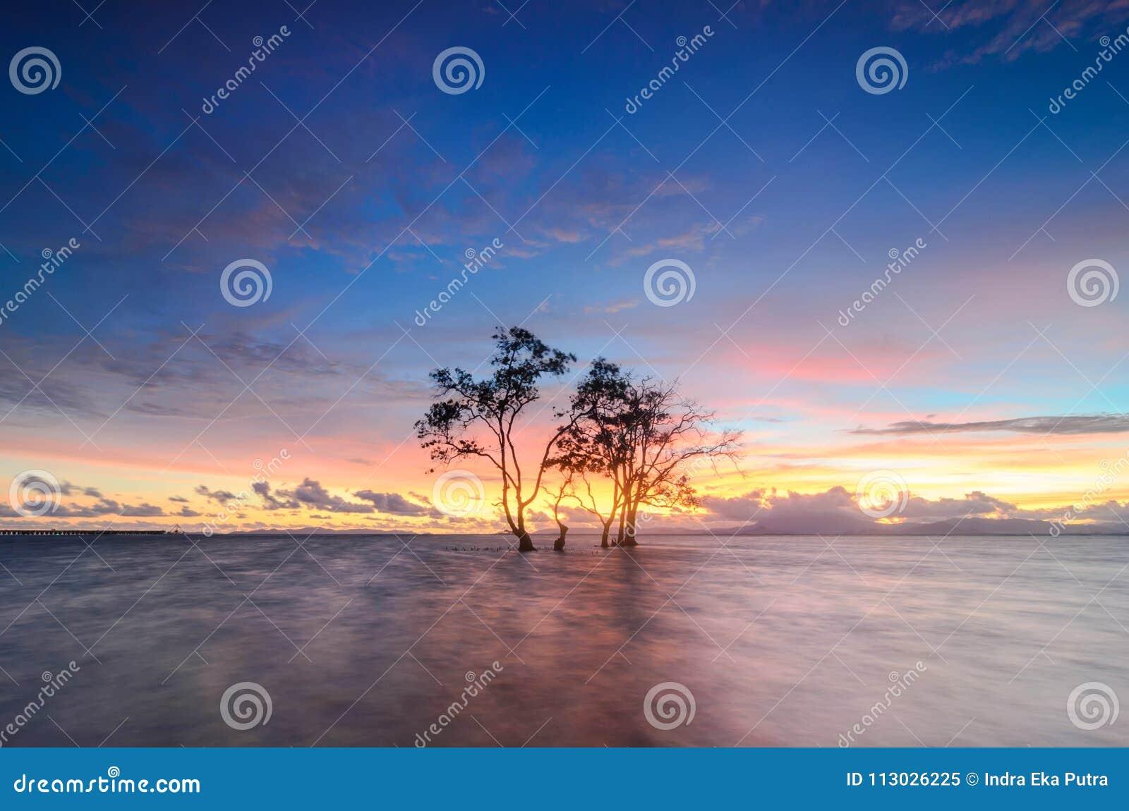 Árbol solo en la playa