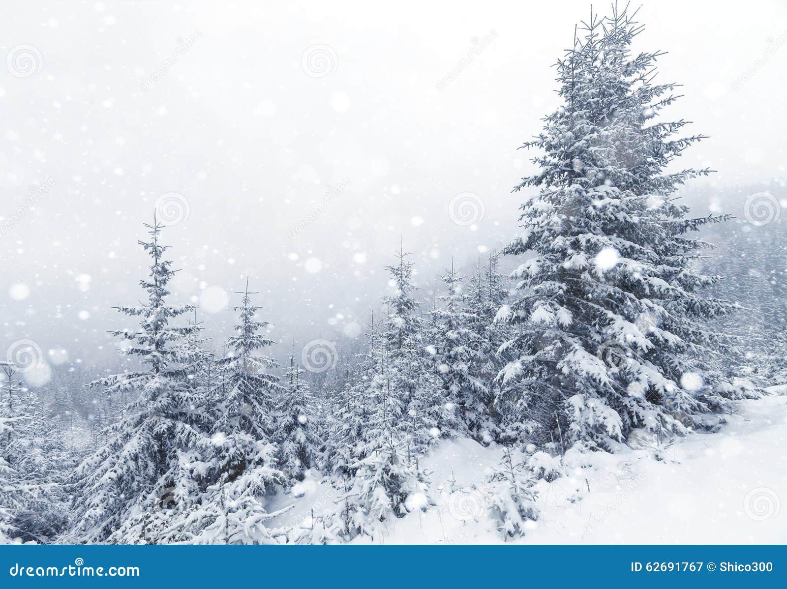 Árbol Spruce Forest Covered de niebla por la nieve en paisaje del invierno