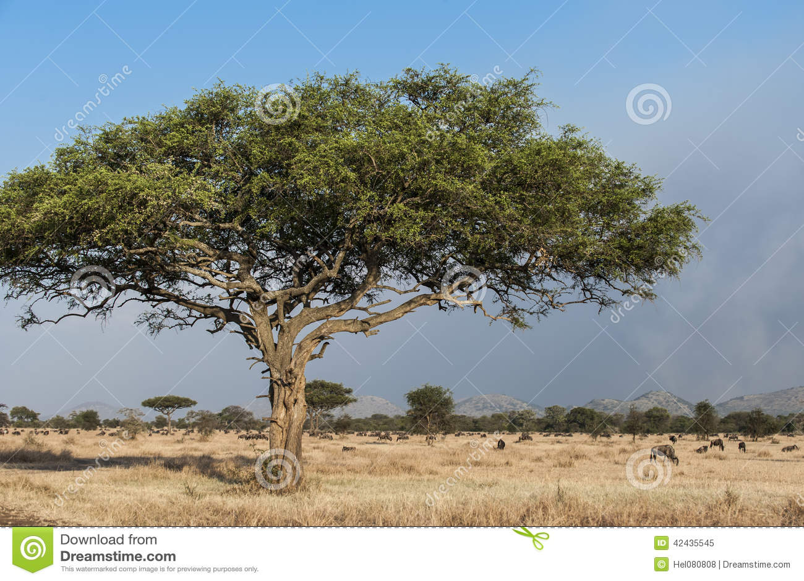 Árbol típico en África