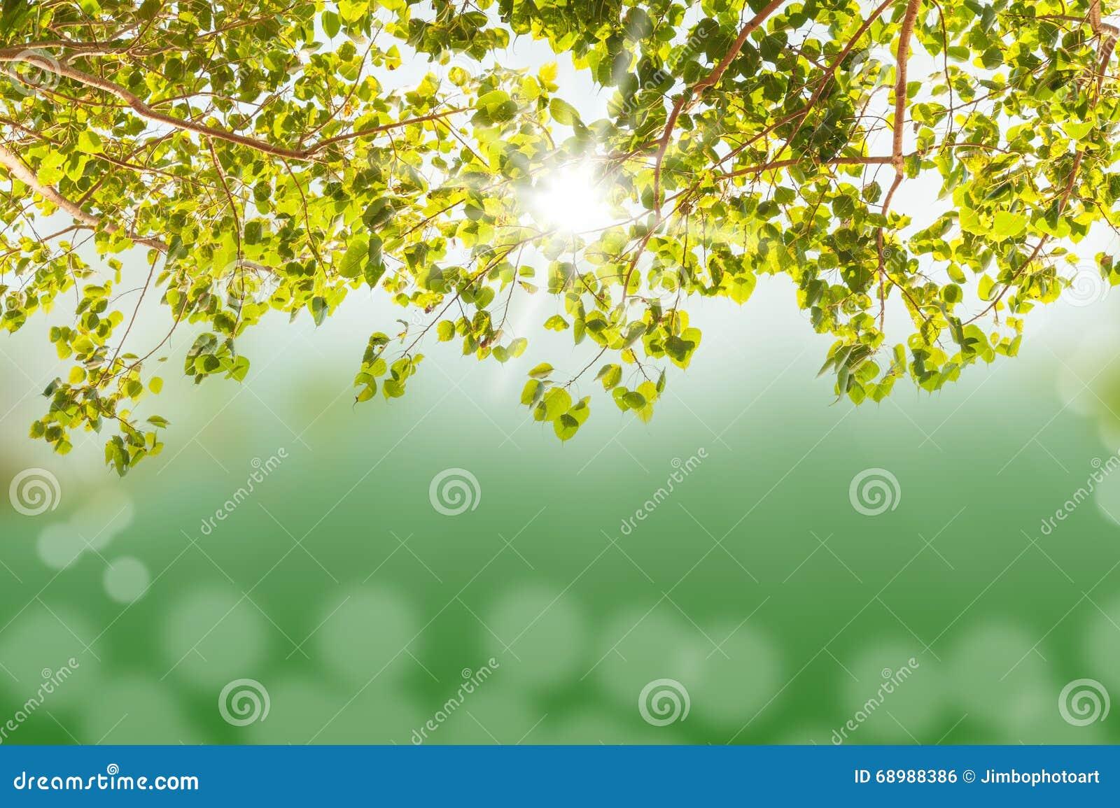 Árbol verde con el bokeh y el rayo solar ligeros borrosos