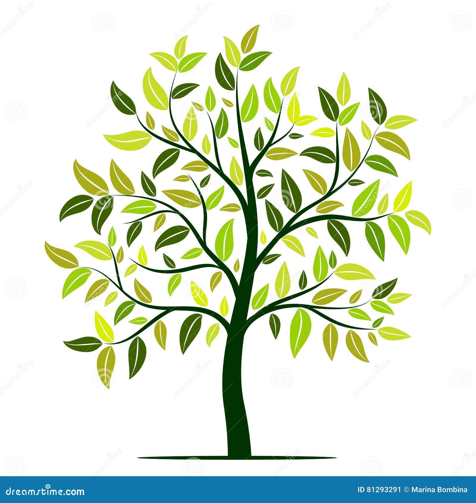 rbol verde con vector de las hojas ilustraci n del vector