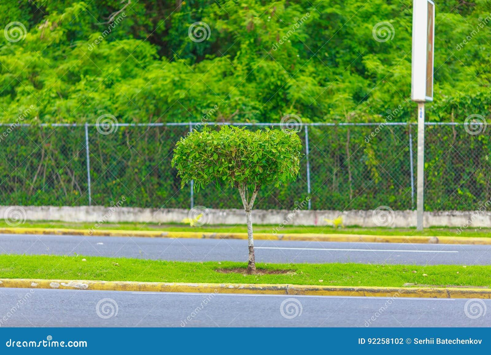 Árbol verde en el camino