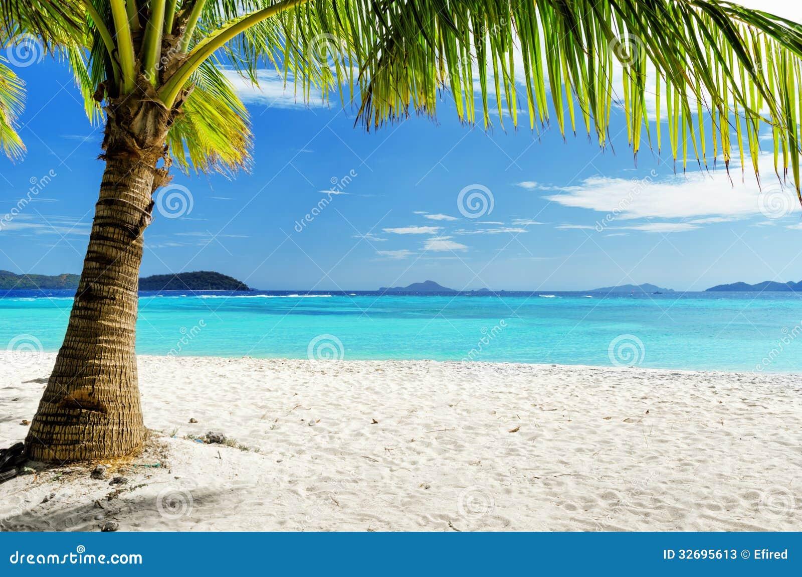 Rbol verde en la playa blanca de la arena fotos de for Arena de playa precio