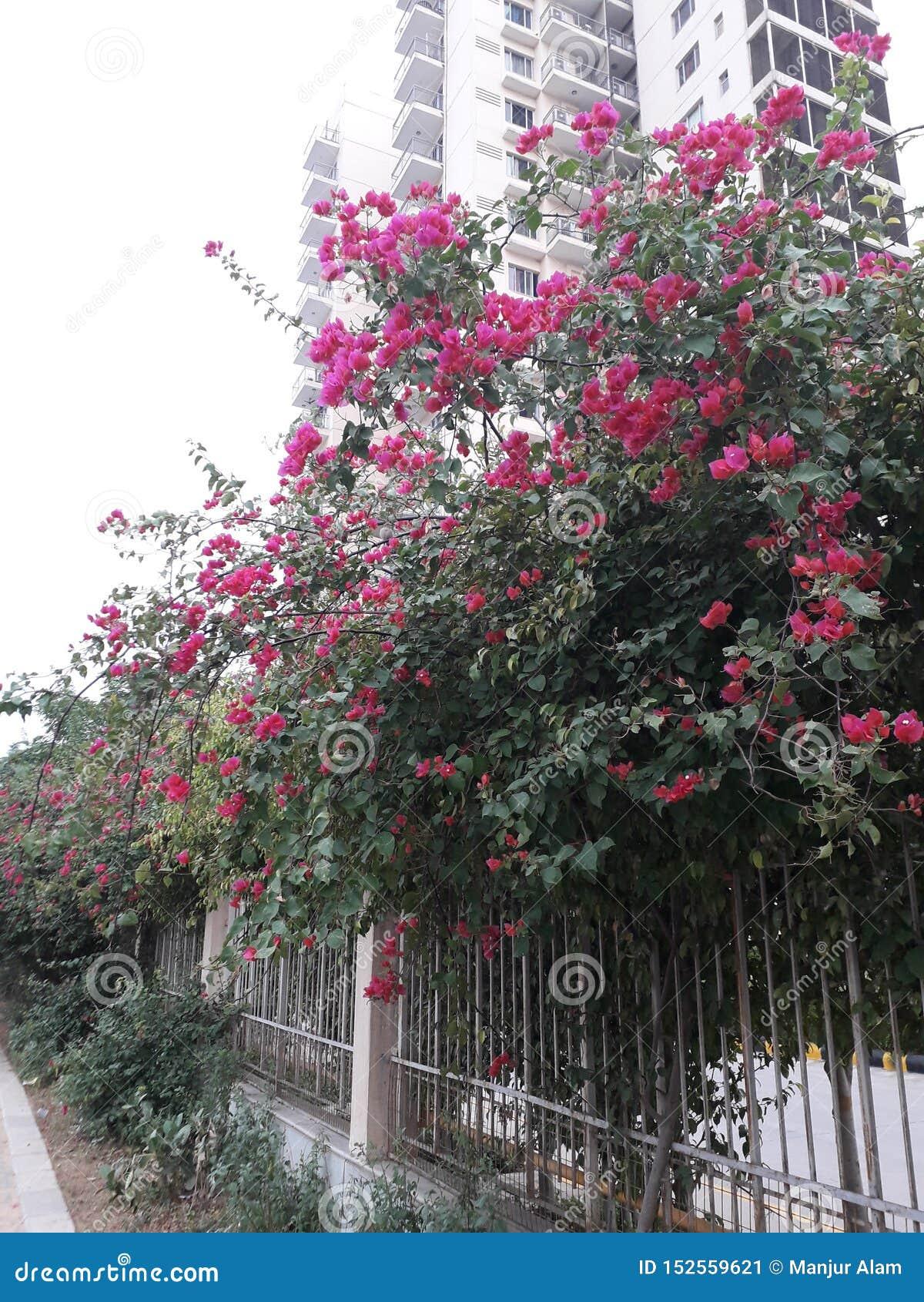 Árbol verde hermoso y rosa