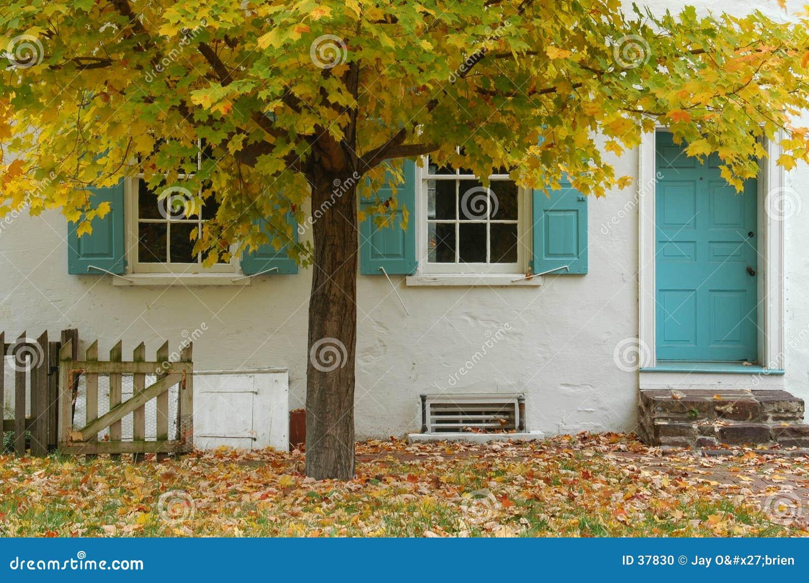 Árbol y casa