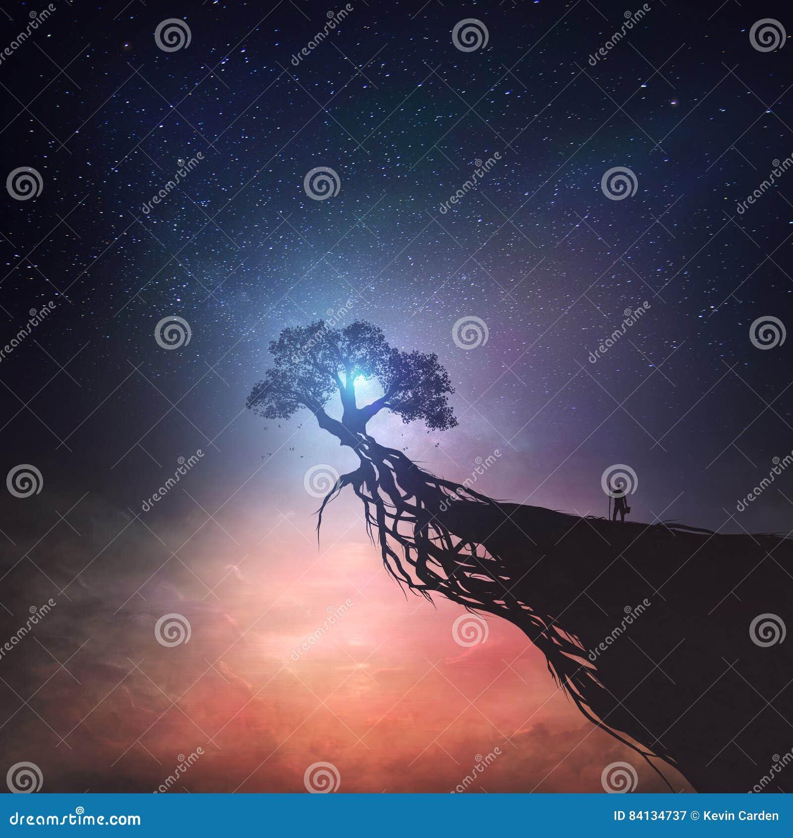 Árbol y cielo nocturno