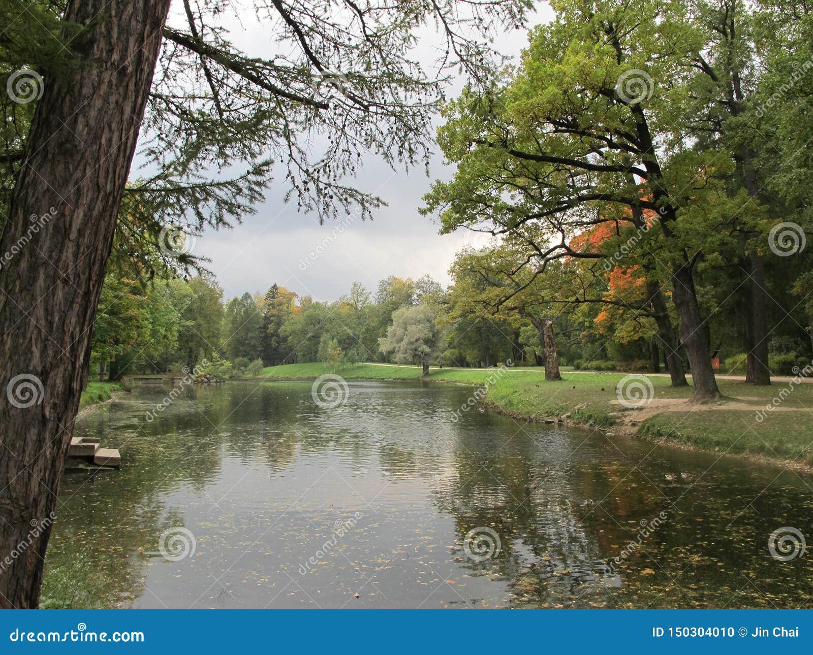 Árbol y lago del otoño en el parque