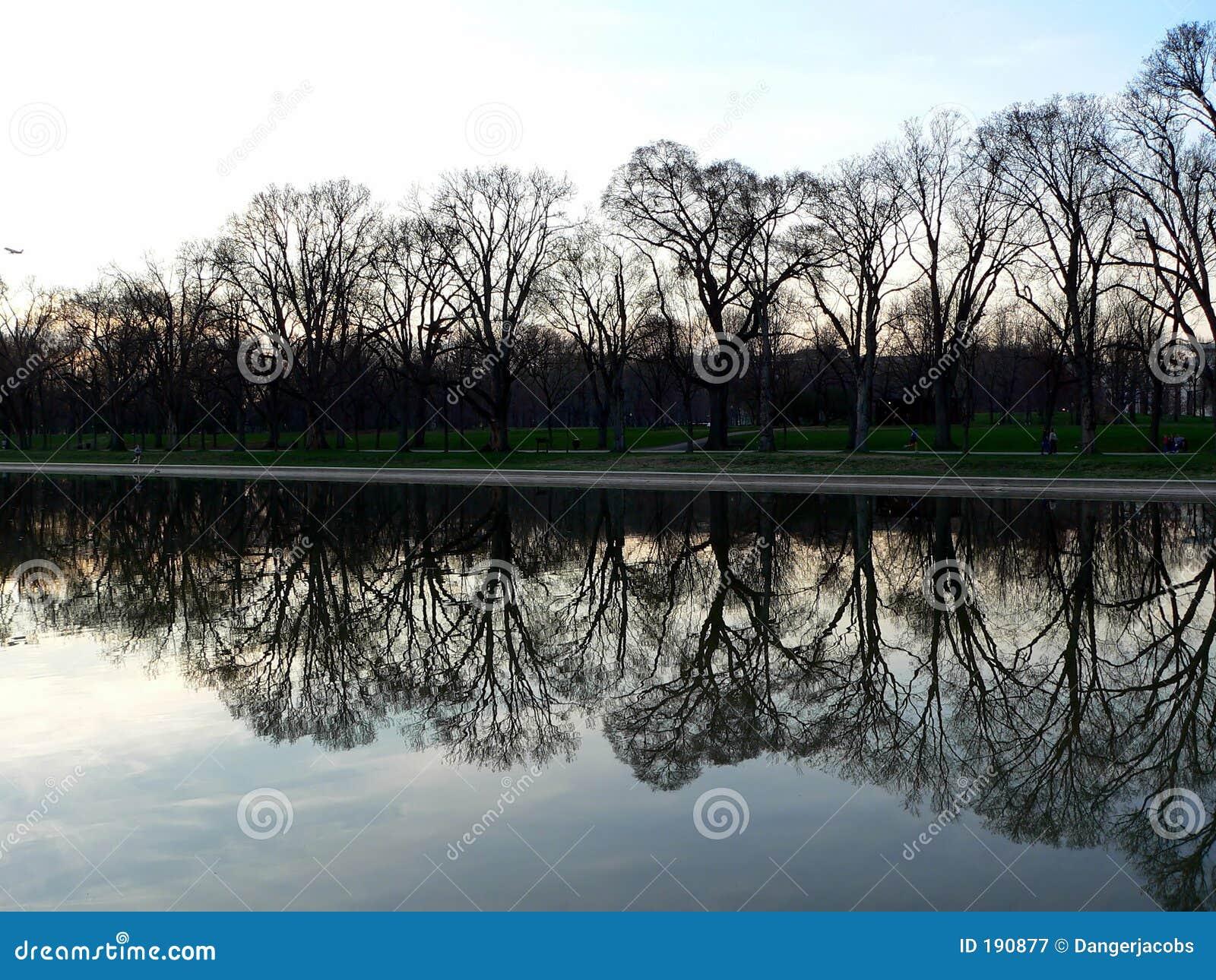 Árbol y piscina de reflejo en el monumento de Lincoln en Washington DC