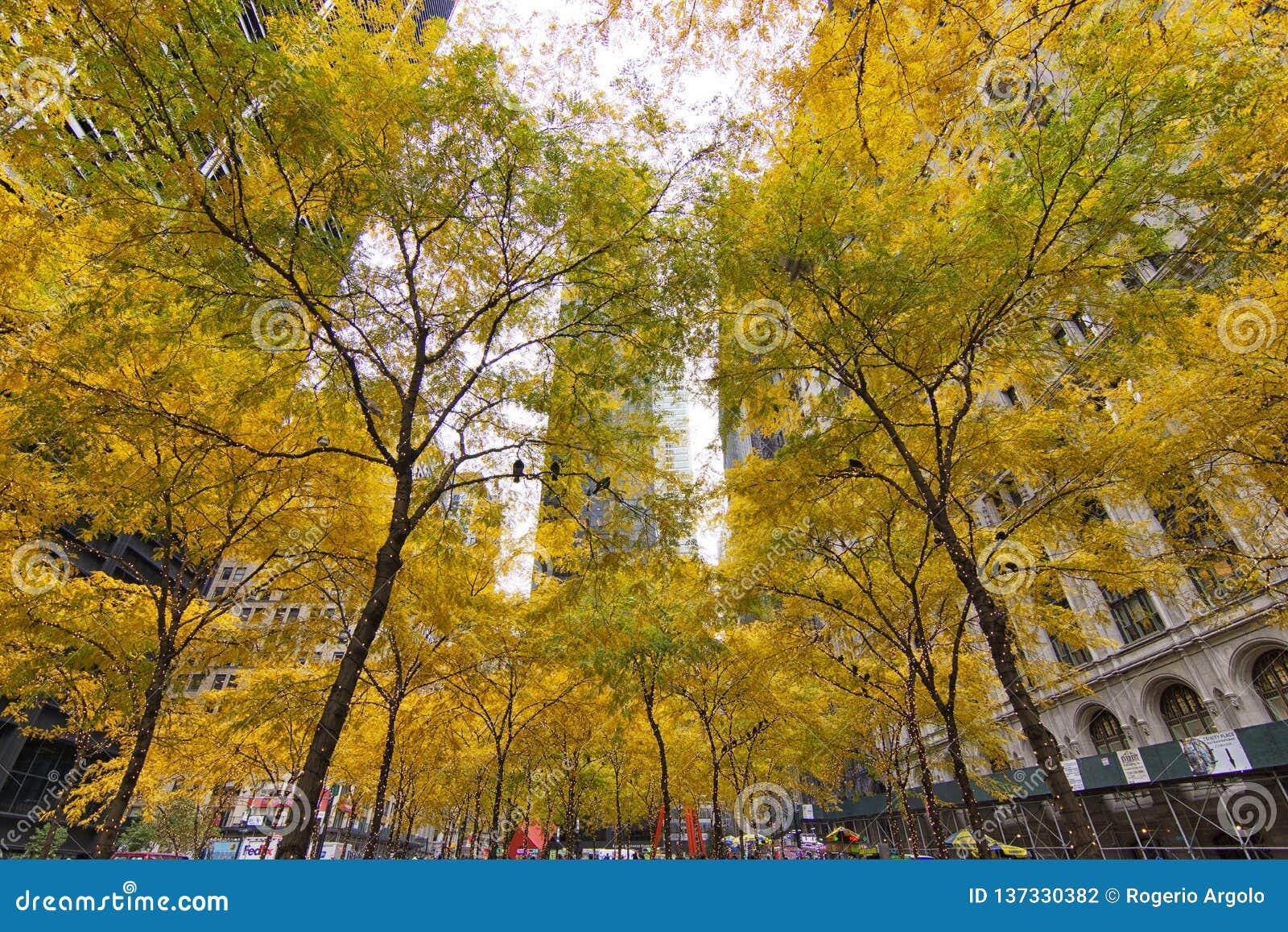 Árboles amarillos Zuccotti Park