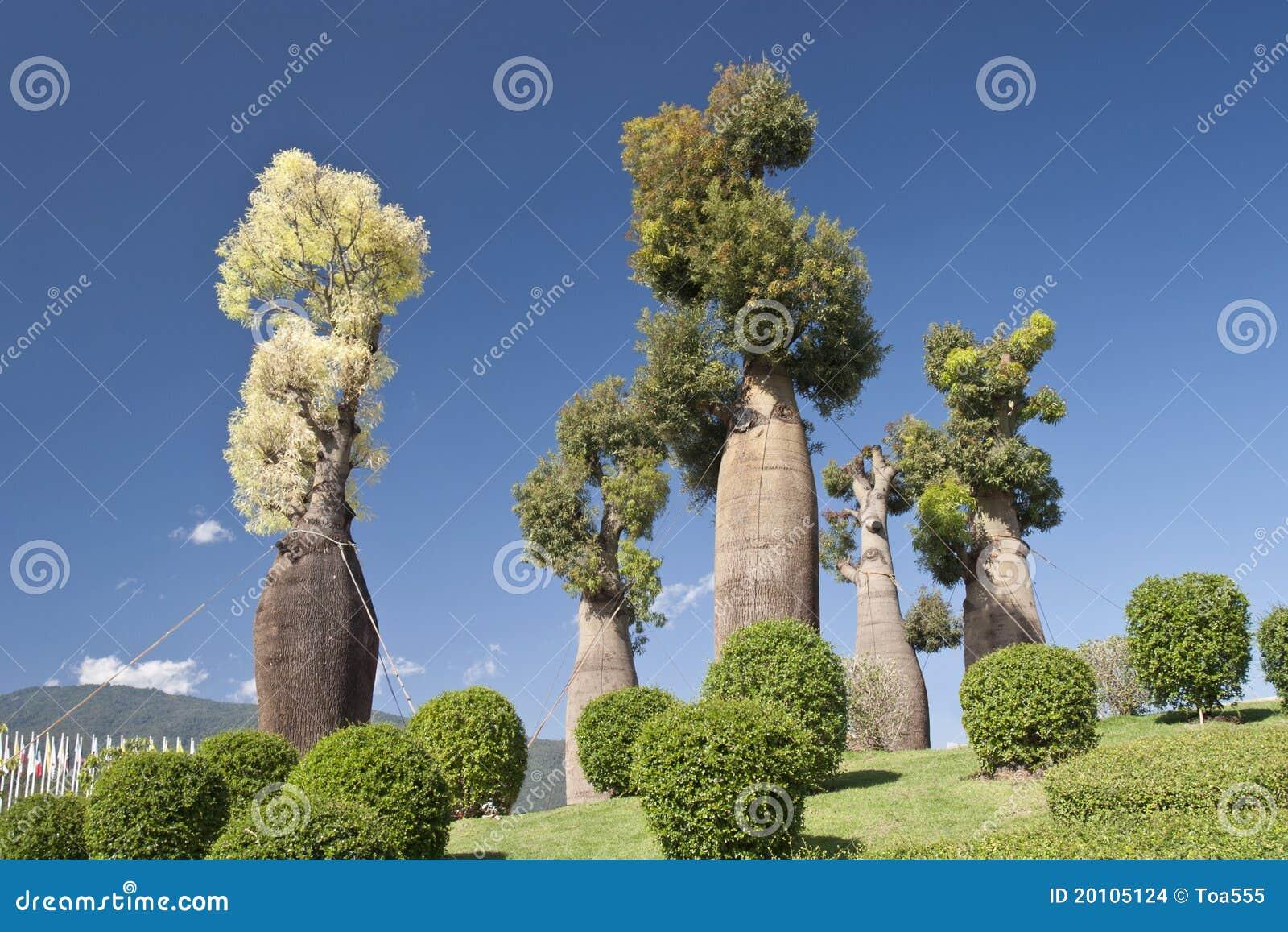 Rboles australianos del baobab en jard n bot nico for Arboles del jardin botanico