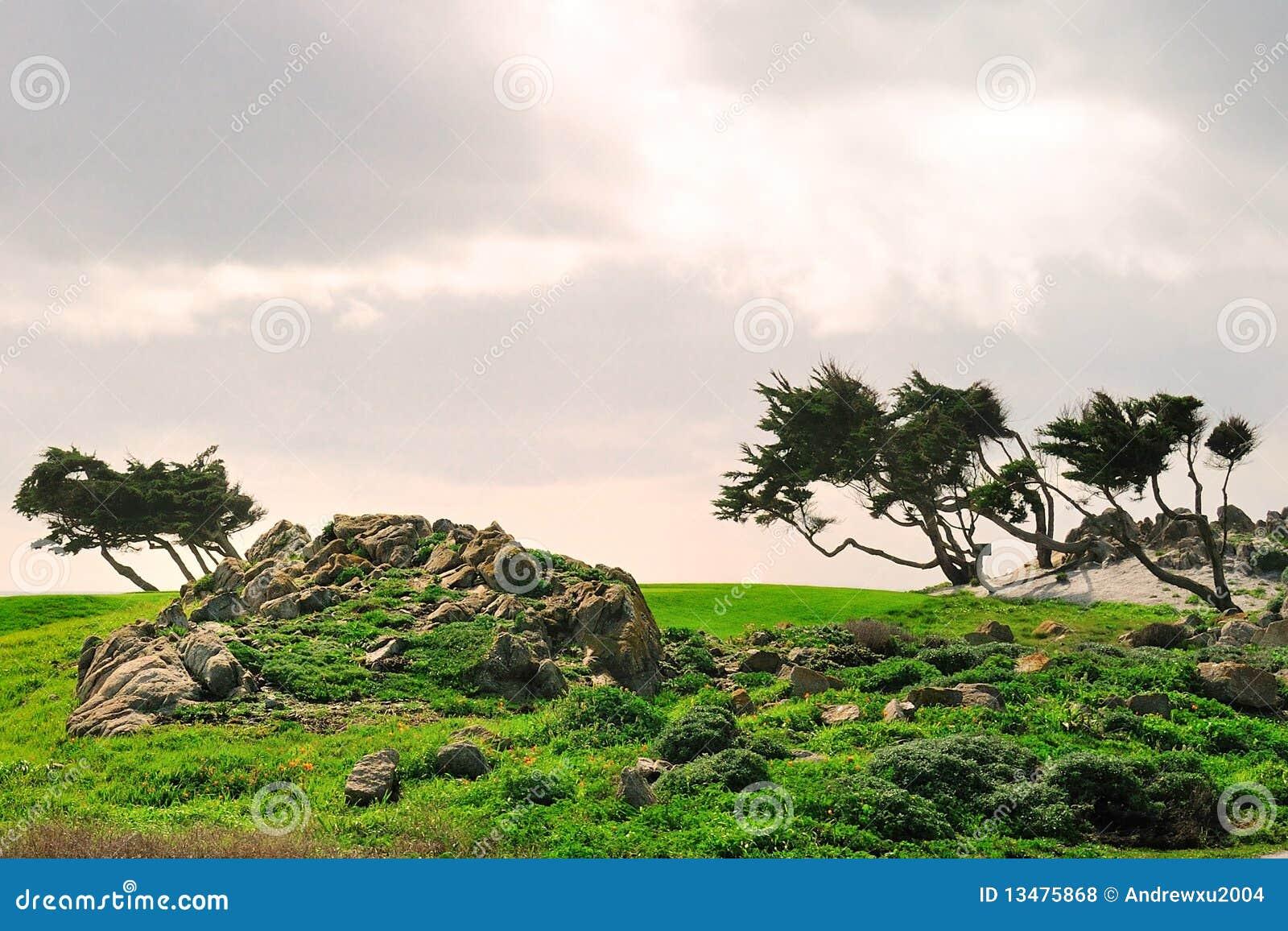 Árboles bajo el viento después de la tormenta