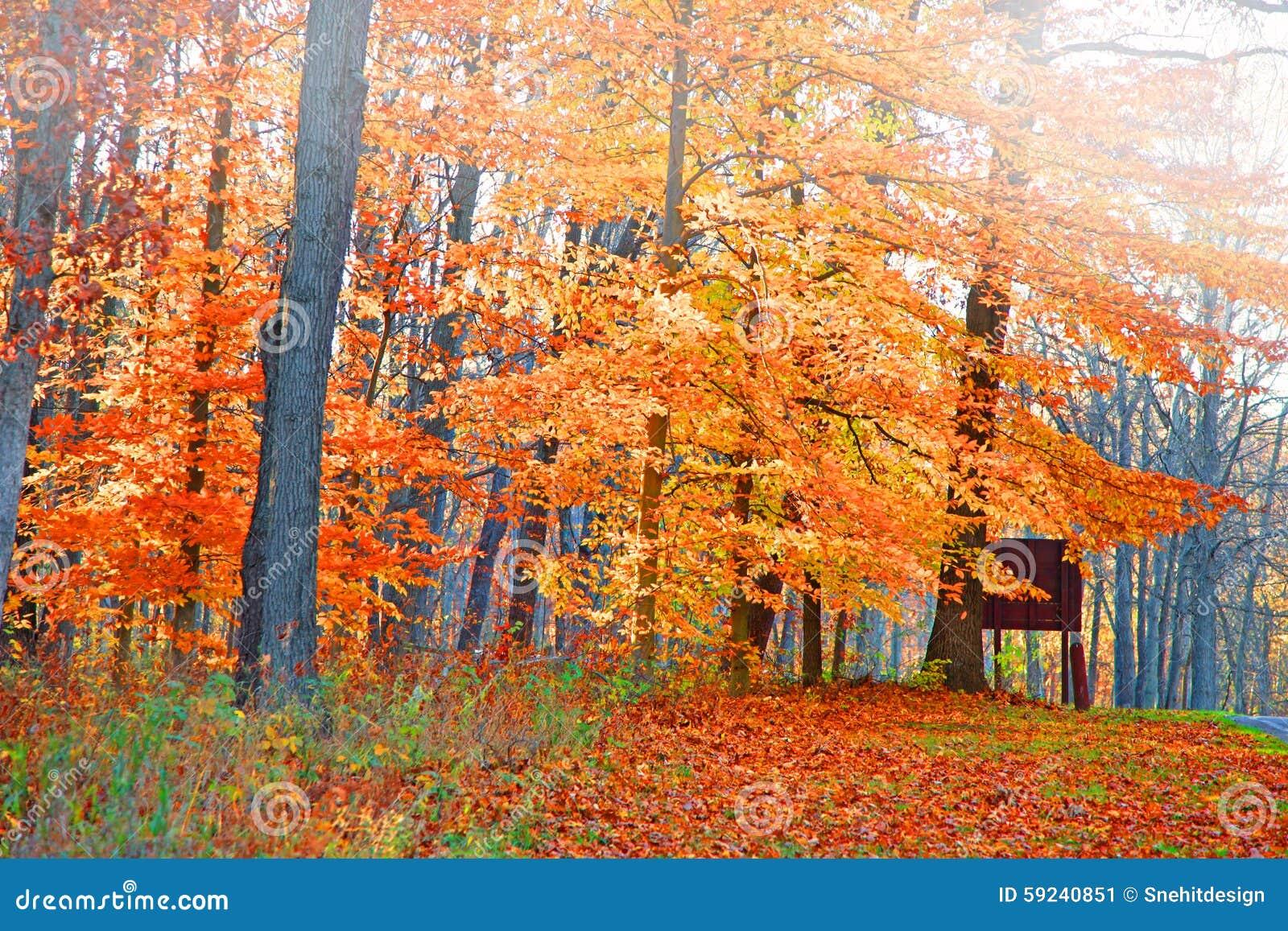 Download Árboles Brillantes Del Otoño Imagen de archivo - Imagen de bosque, cielo: 59240851
