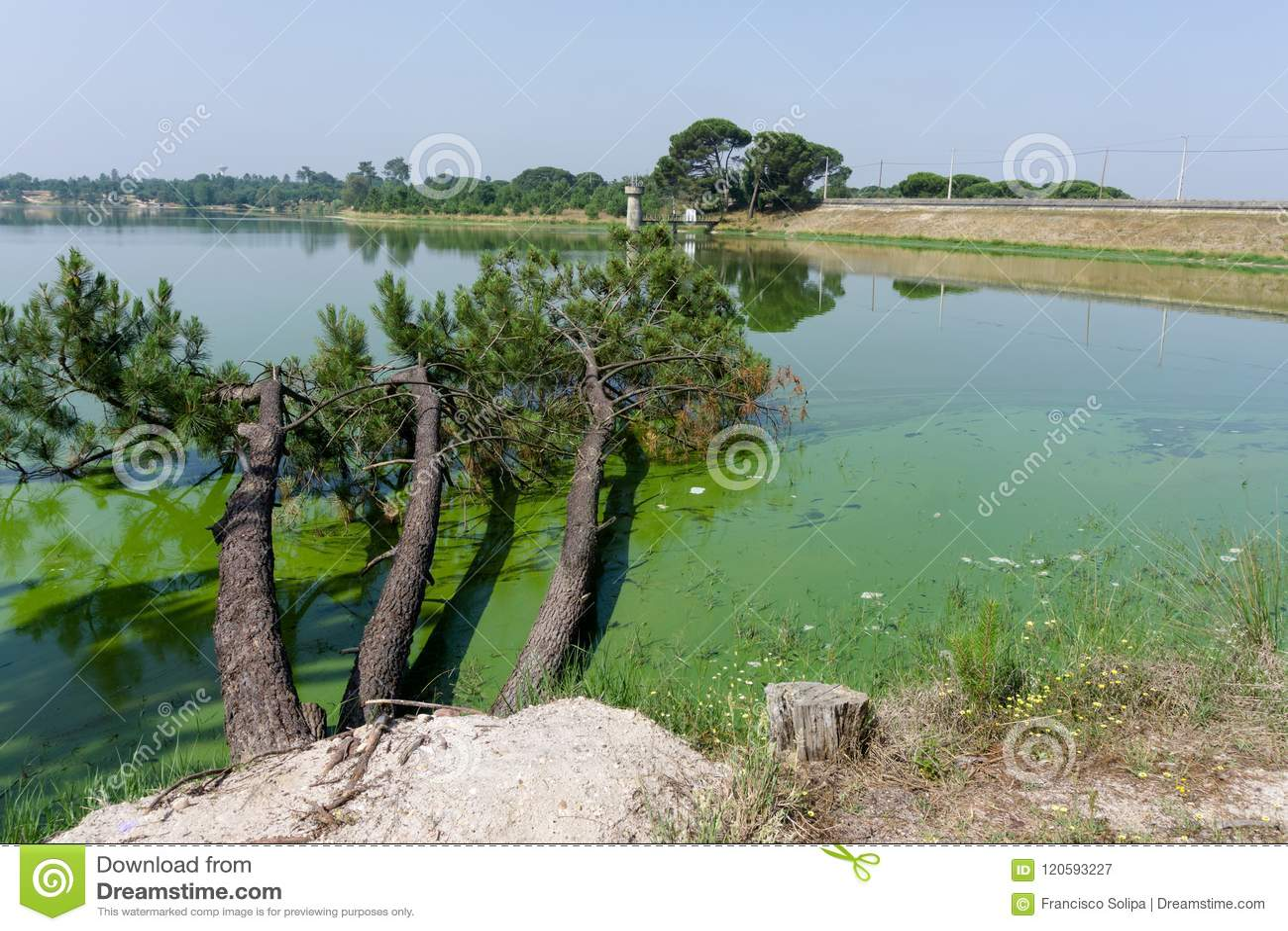 Árboles caidos en el lago; en Barragem de Magos, Salvaterra, vire hacia el lado de babor