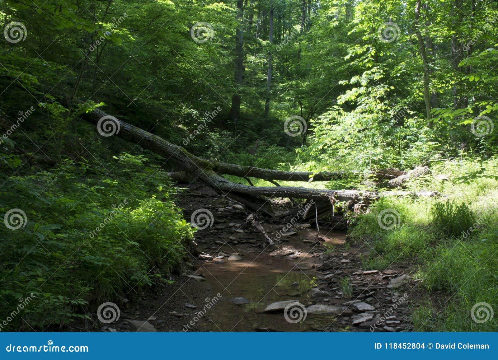 Árboles caidos a través de una corriente