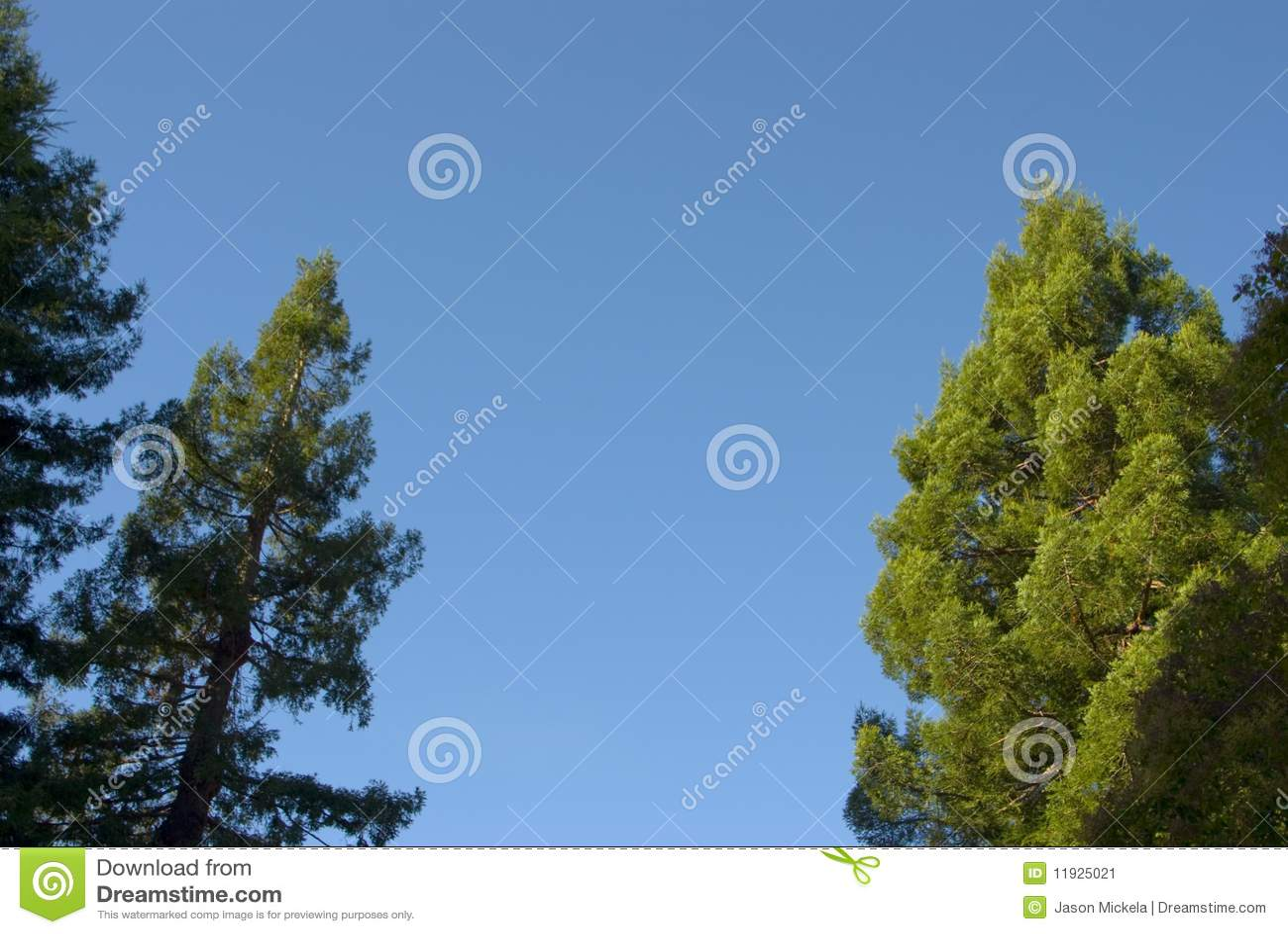 Árboles, cielo que enmarca