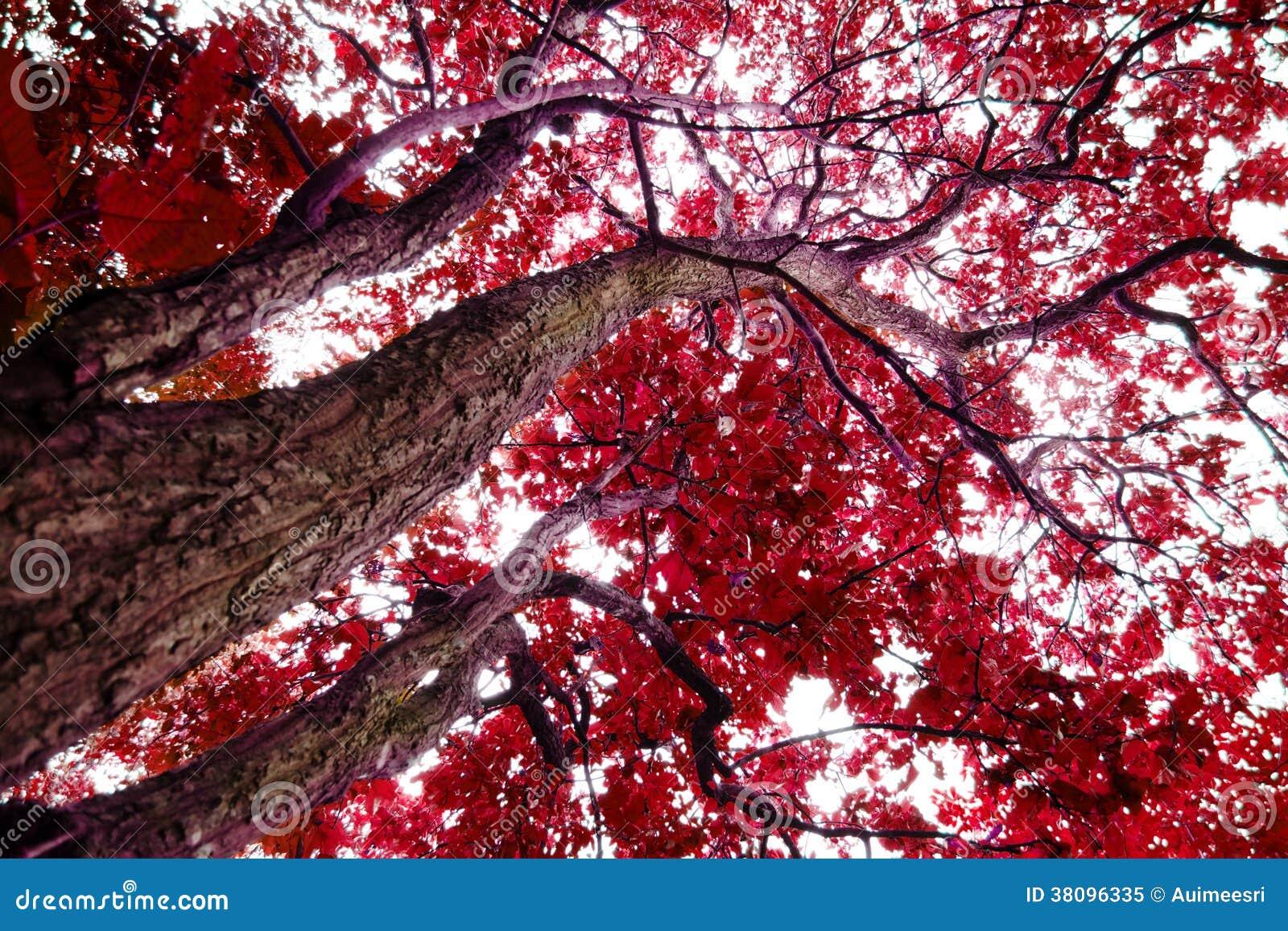 Árboles con las hojas rojas