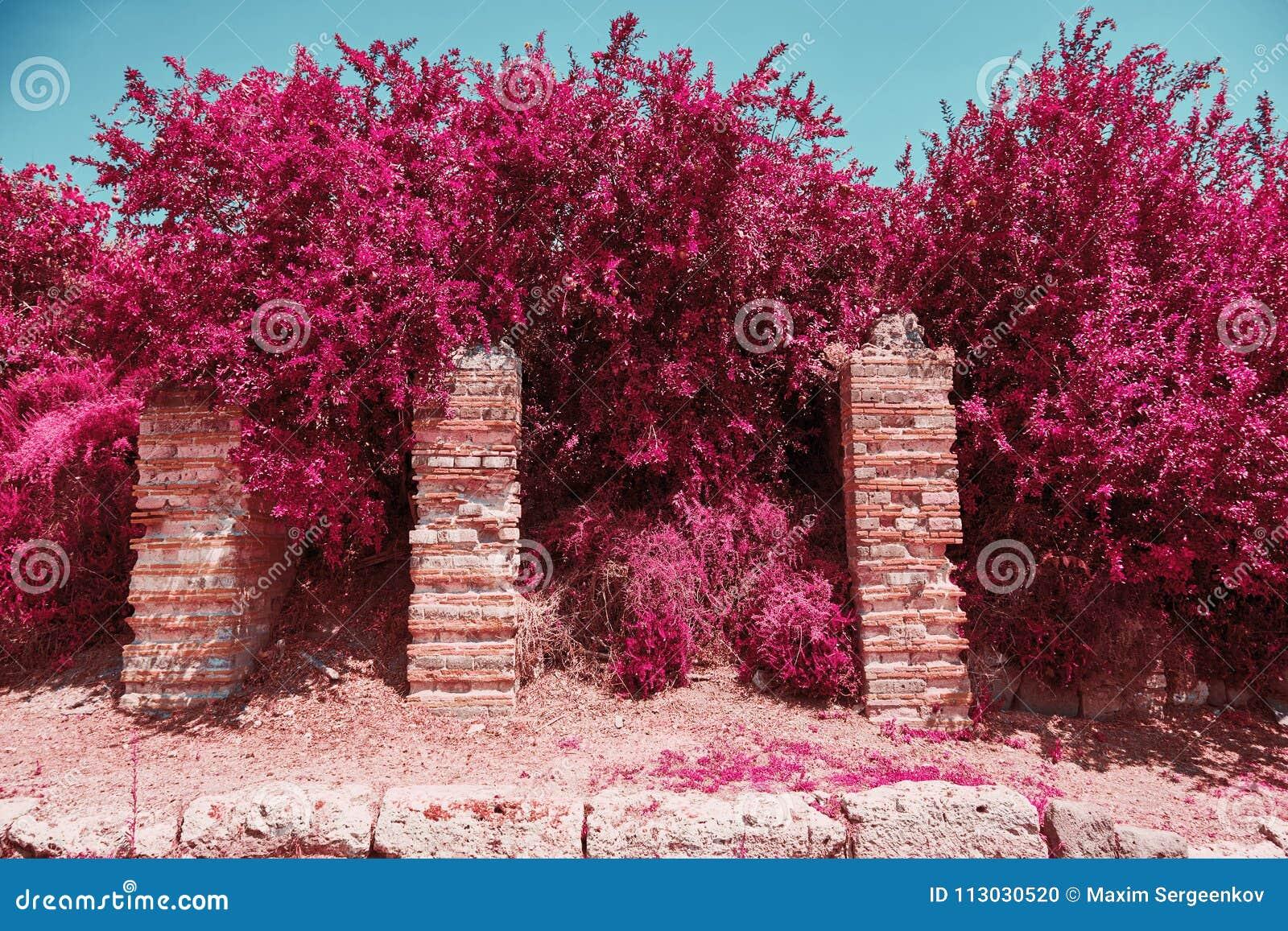 Árboles con las hojas rosadas con el fondo del cielo azul
