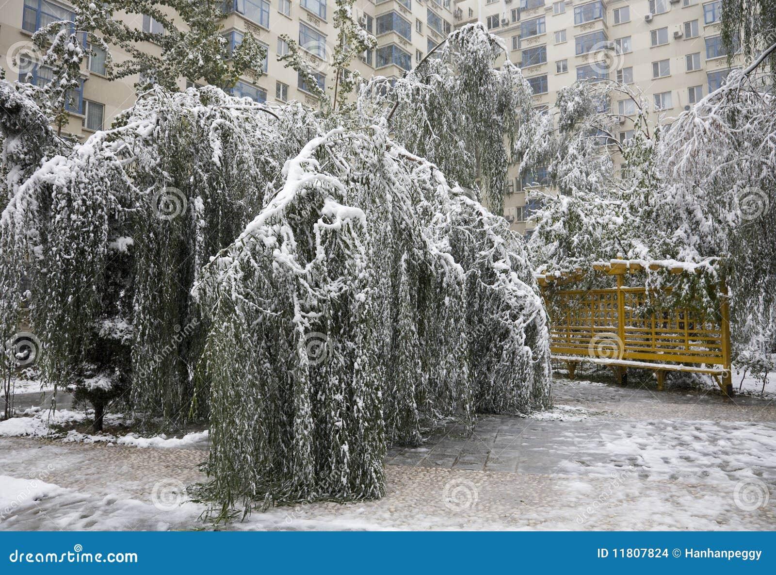 Árboles dañados nieve