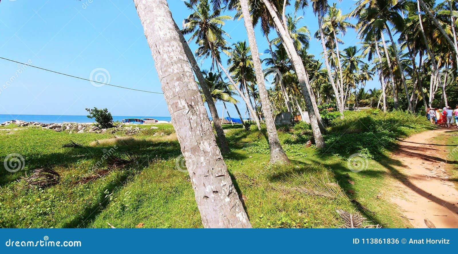 Foto Di Un Camino Acceso Árboles de coco al lado de un camino de acceso a un pueblo