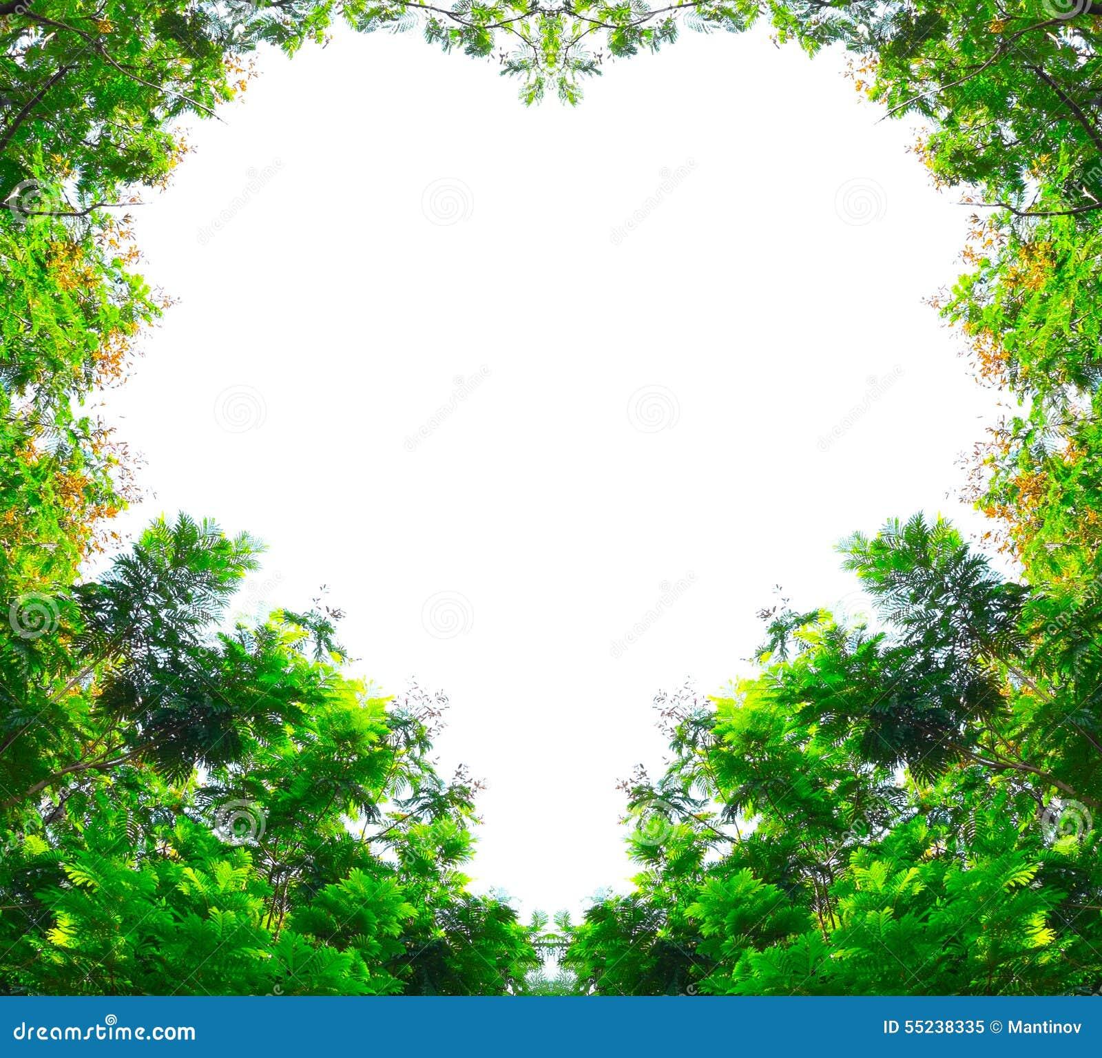 árboles De Ducha De Oro En Forma Del Corazón Imagen De Archivo