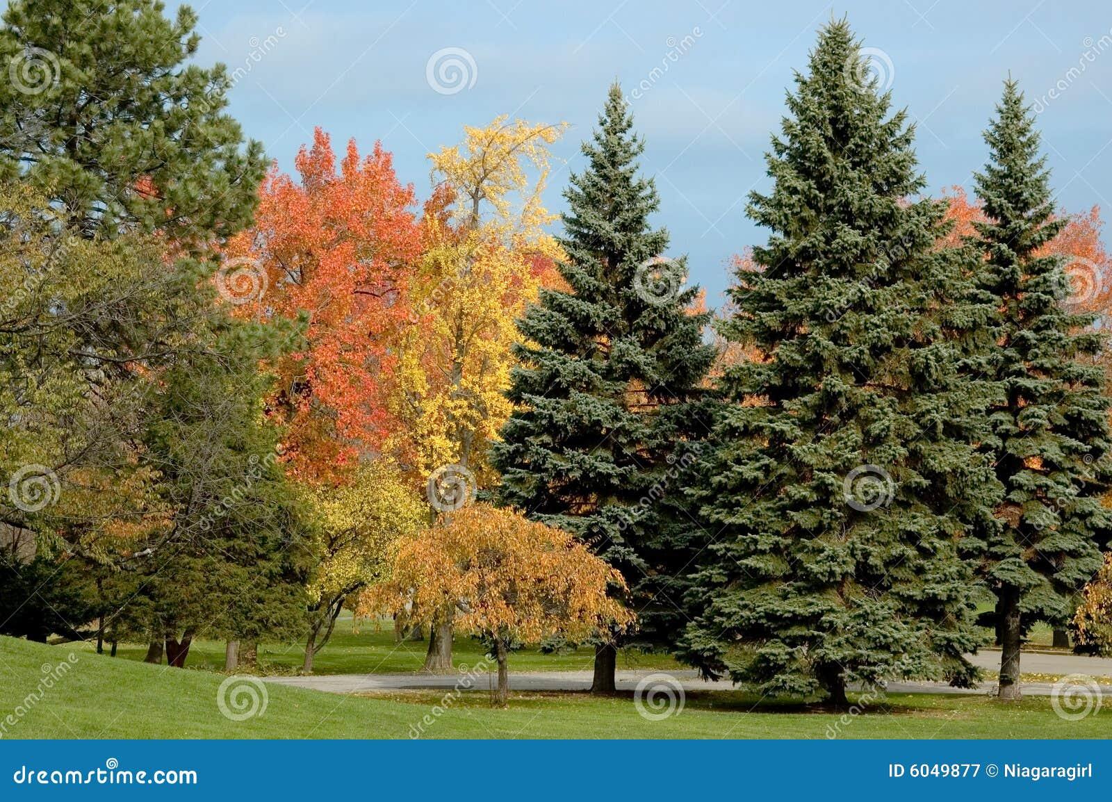Rboles de hoja perenne y follaje de ca da imagen de for Arboles de jardin de hoja perenne