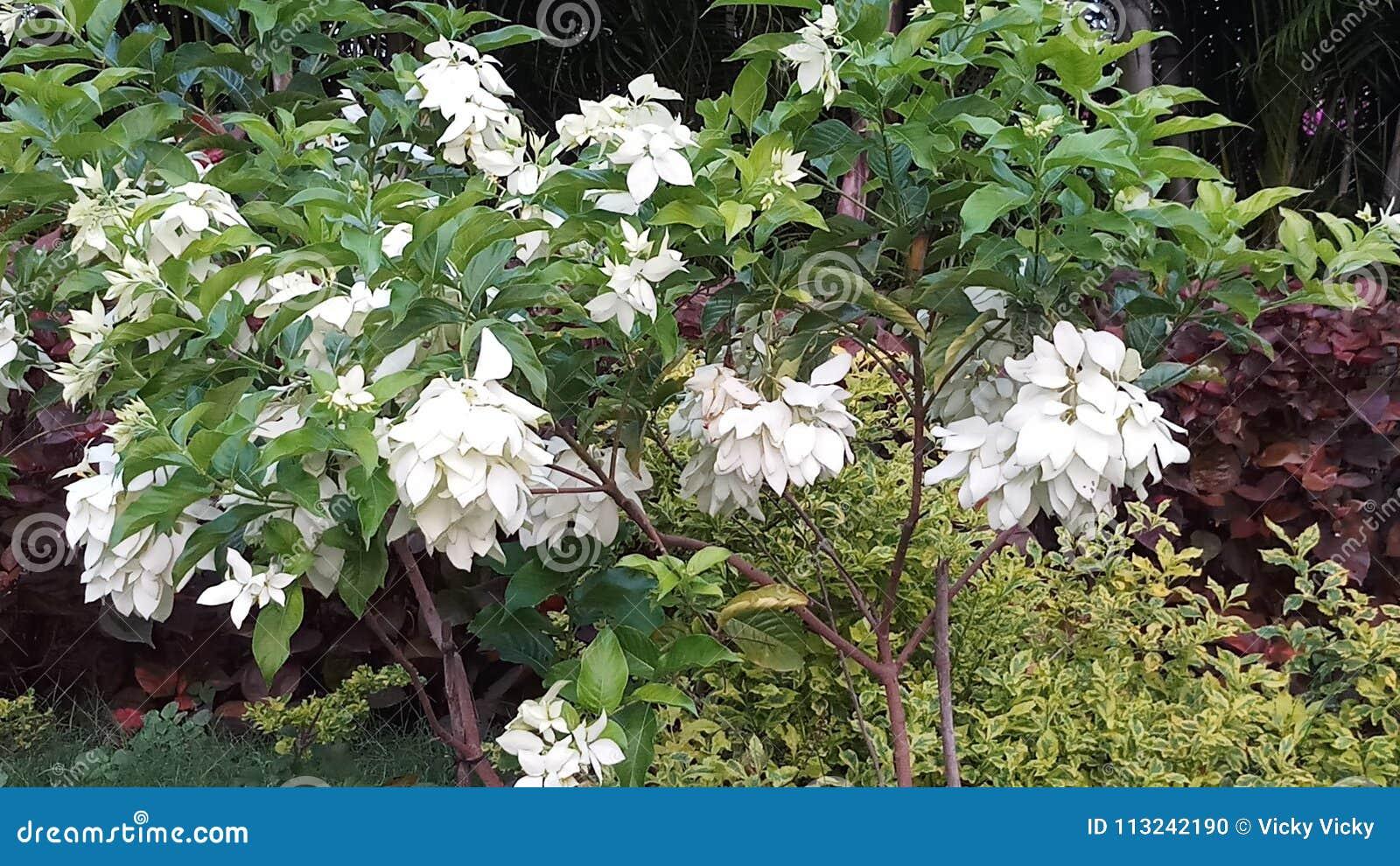 Árboles de la flor blanca