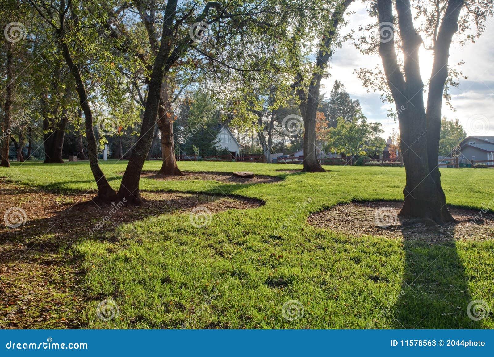 Árboles de la hierba verde y de roble