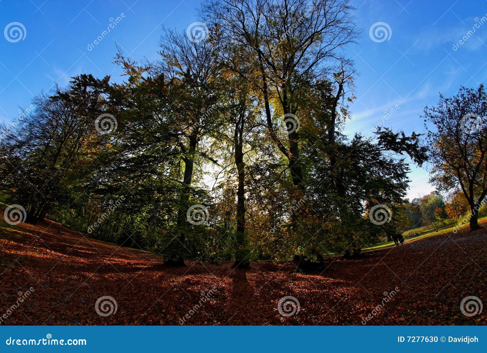 Árboles de la magia del árbol