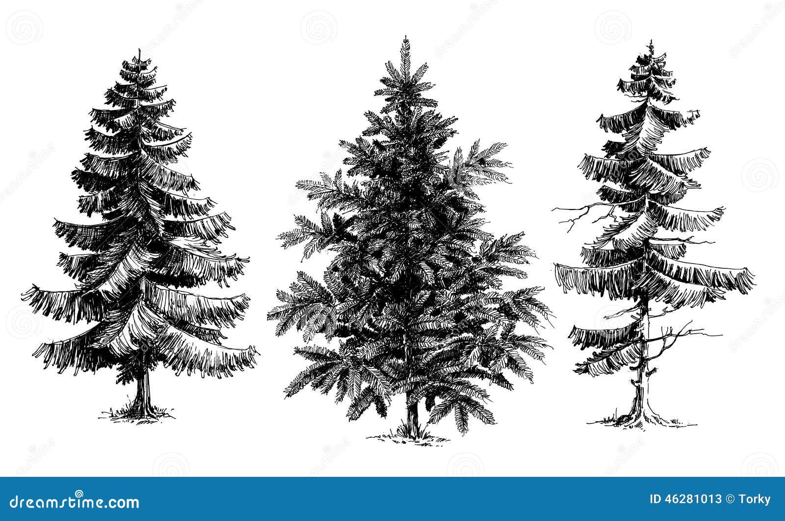Árboles De Pino/árboles De Navidad Ilustración Del