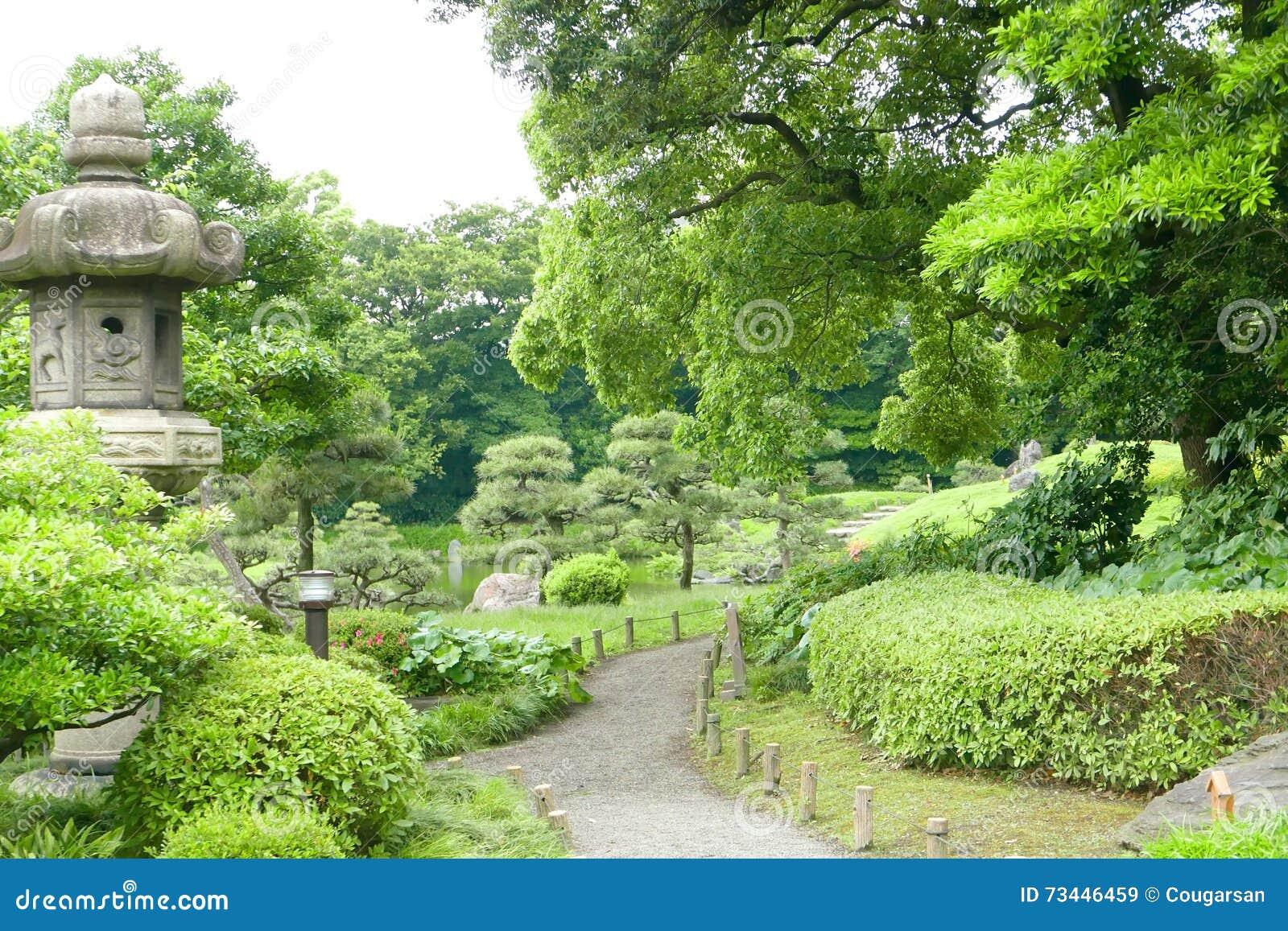 rboles de pino plantas verdes sendero en jardn japons del zen