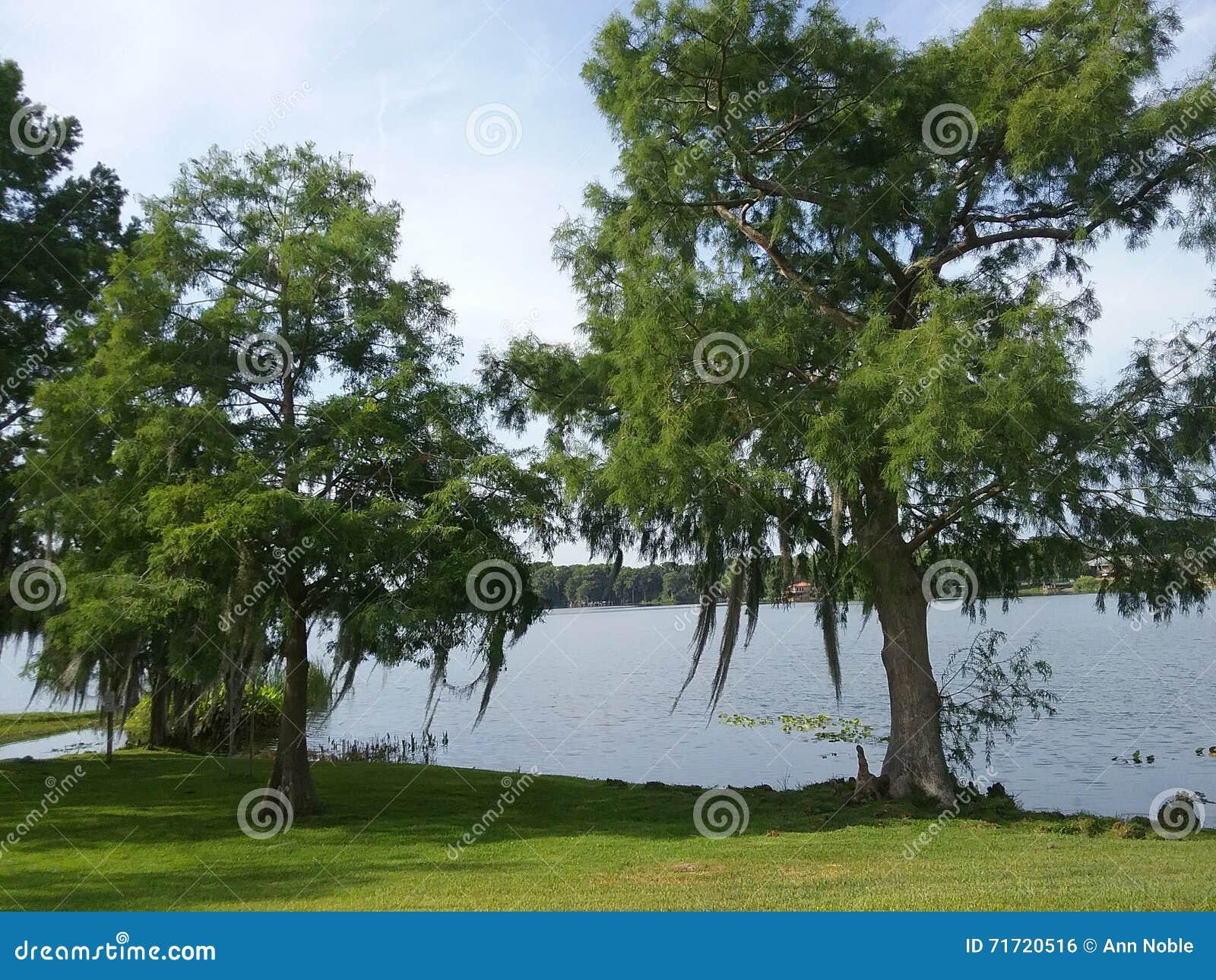Árboles del lago backyard con el musgo