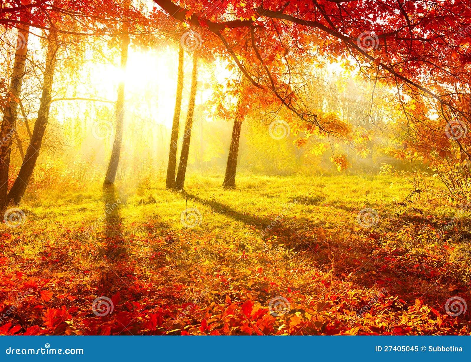 árboles Del Otoño Imagen De Archivo Imagen De Travieso 27405045