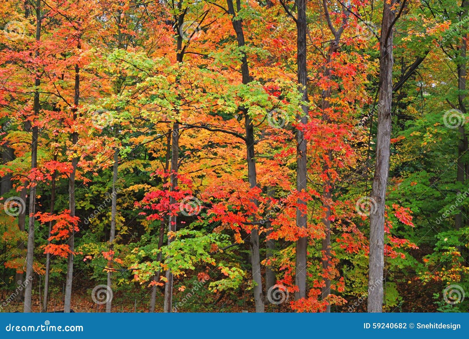 Download Árboles del otoño foto de archivo. Imagen de asoleado - 59240682