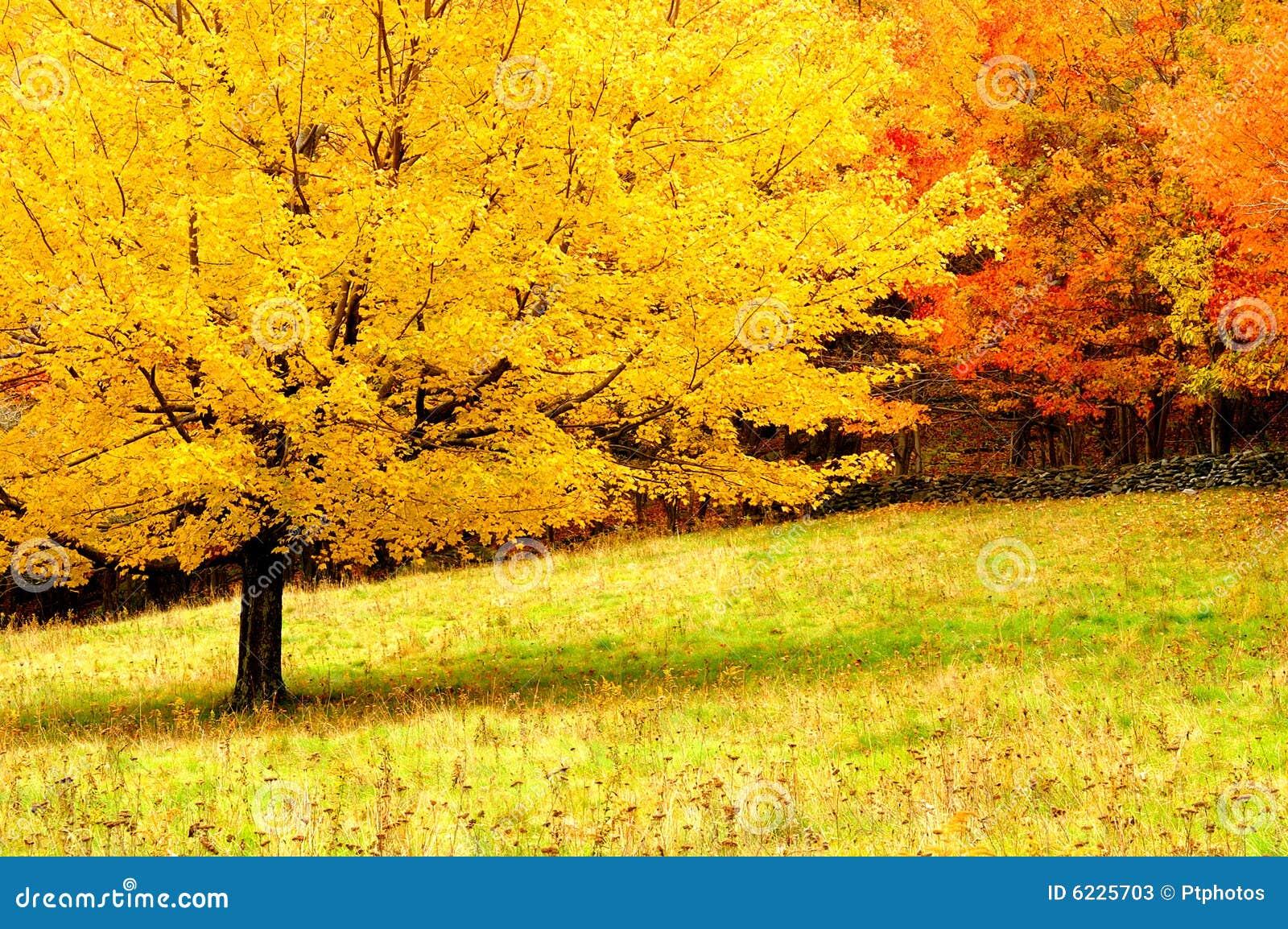 árboles Del Otoño Imagen De Archivo Imagen De Idílico 6225703