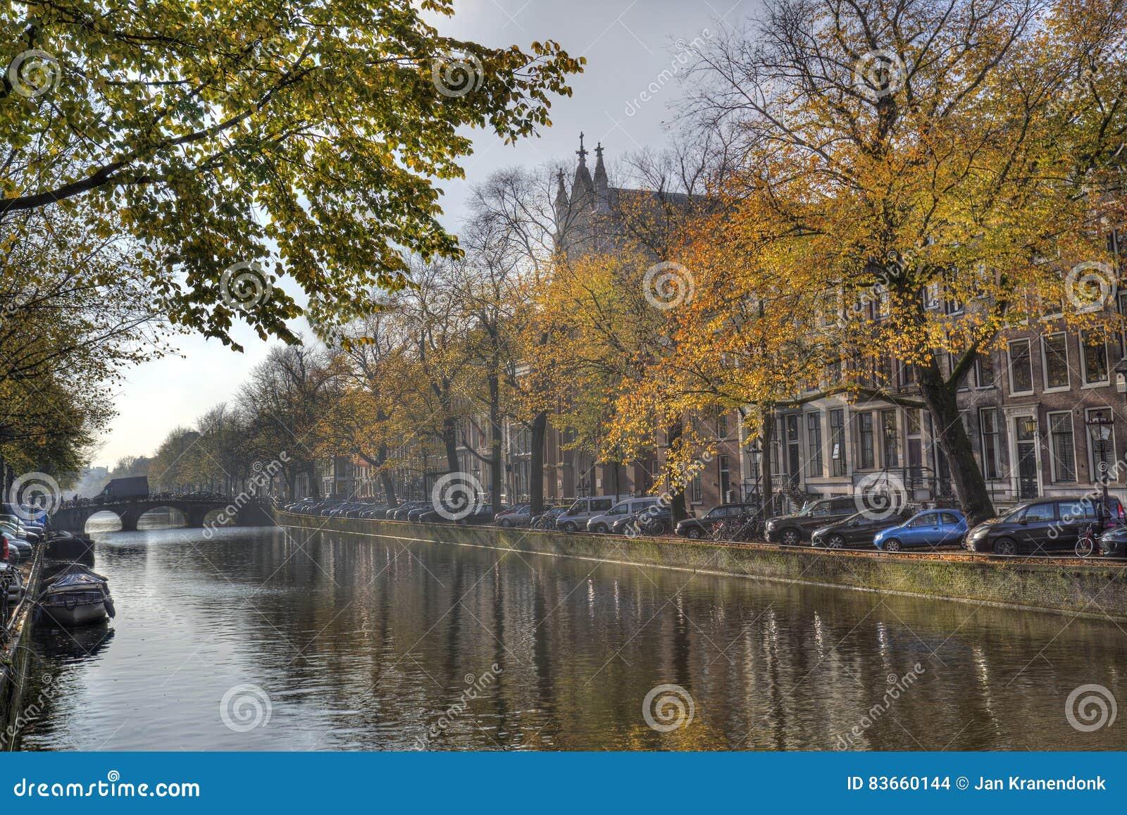 rboles del otoo en amsterdam holanda foto de archivo