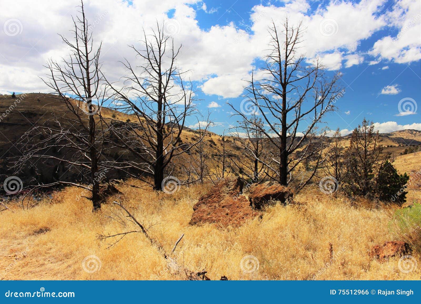 Árboles descubiertos